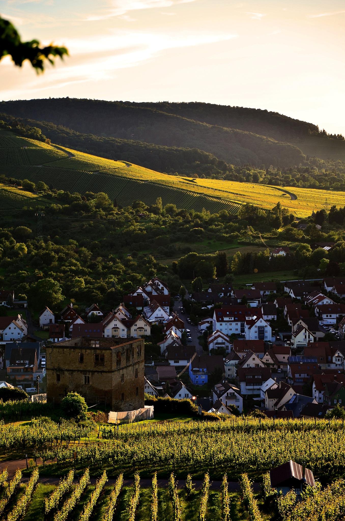 Sunshine & Vineyards by Stoica Emilian
