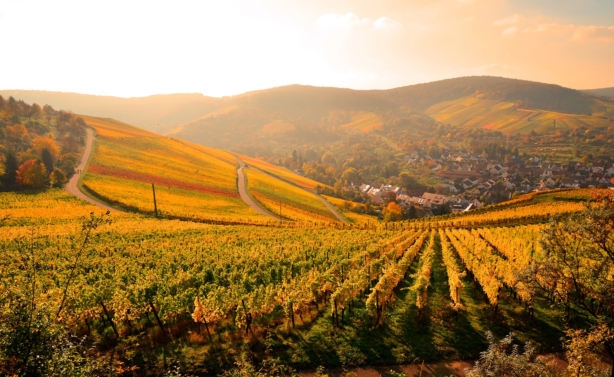 Autumn sunlight by Stoica Emilian
