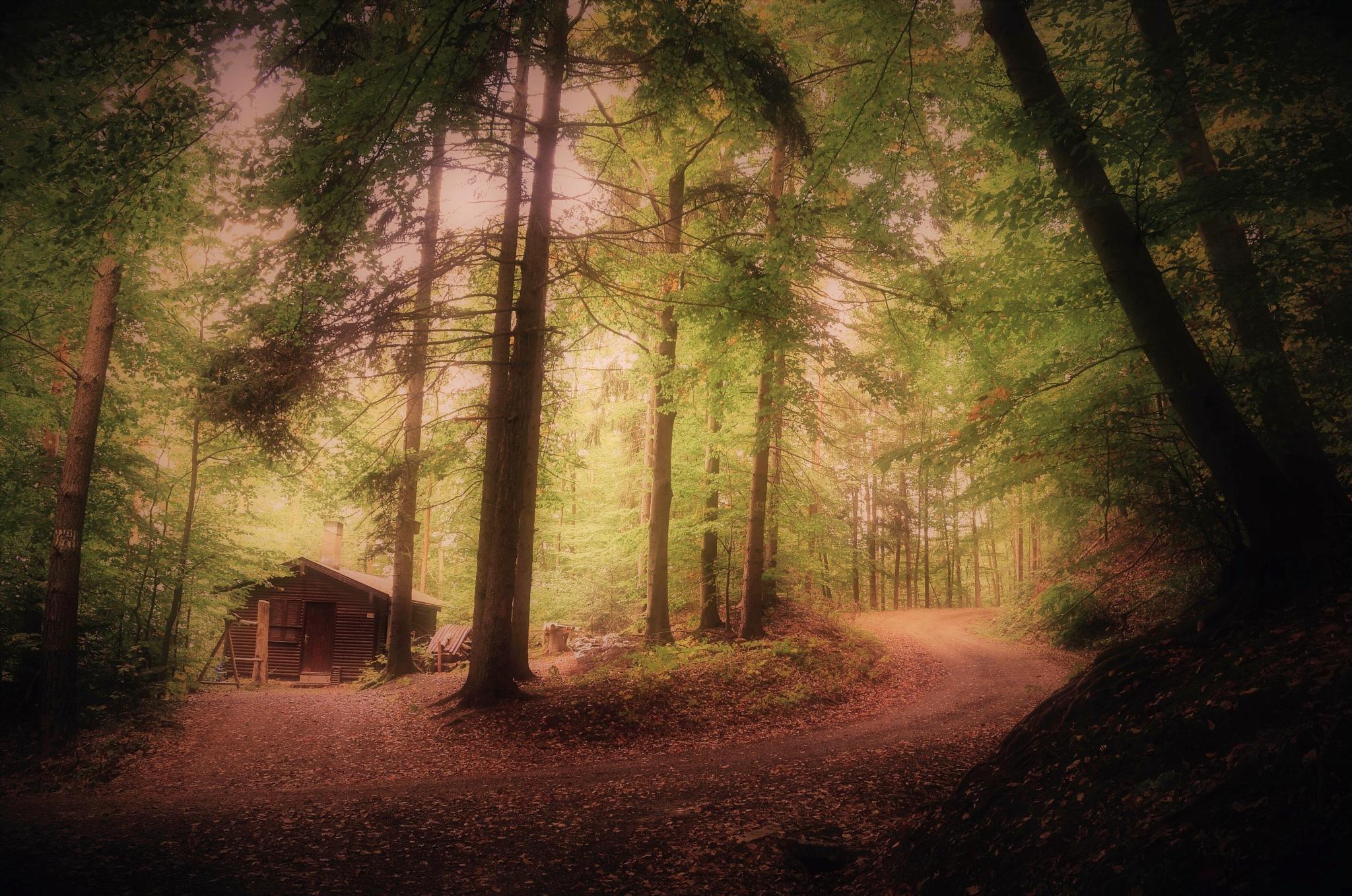 Hidden in the Woods  by Stoica Emilian