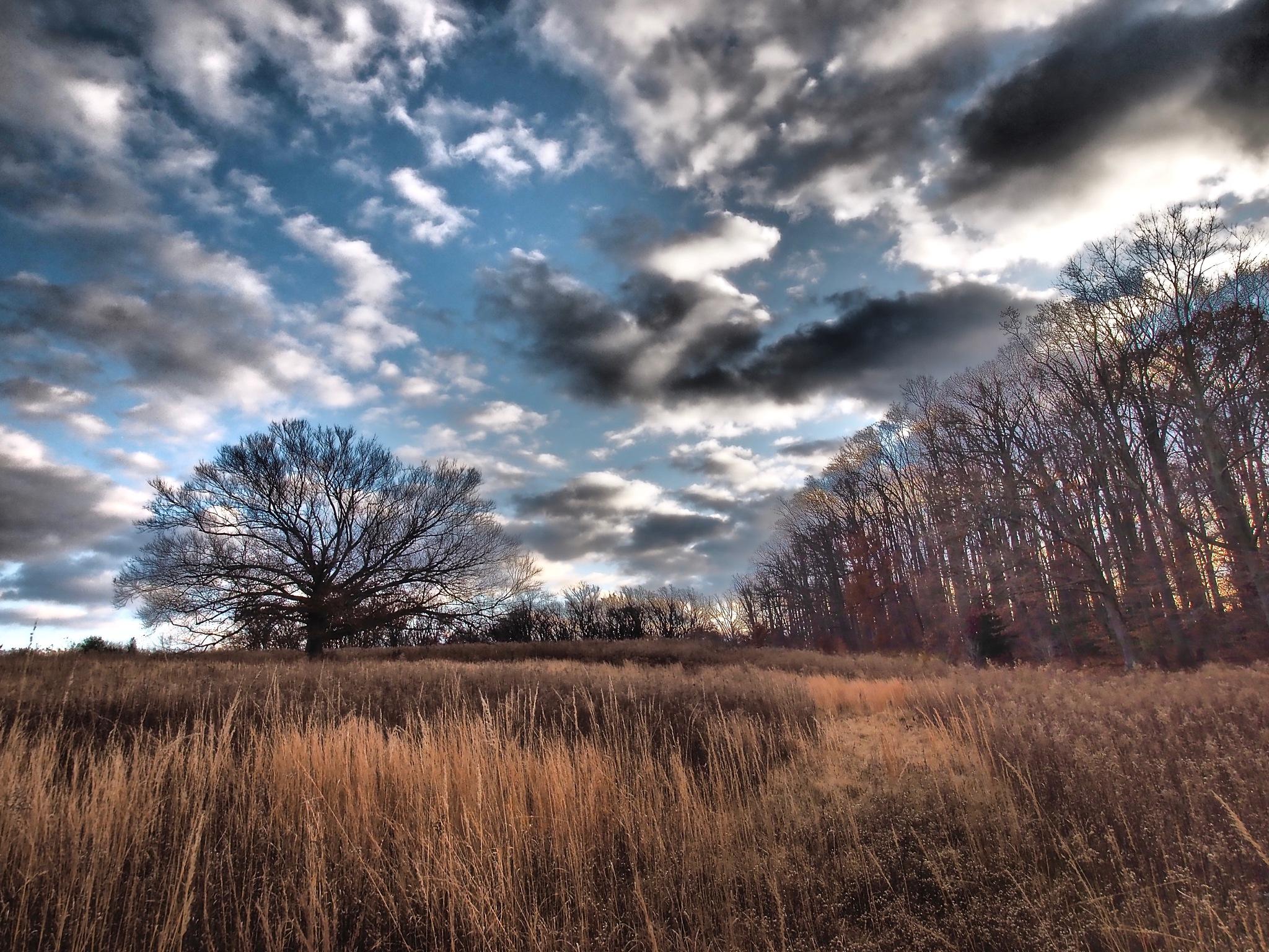 Hillside by Shawn456