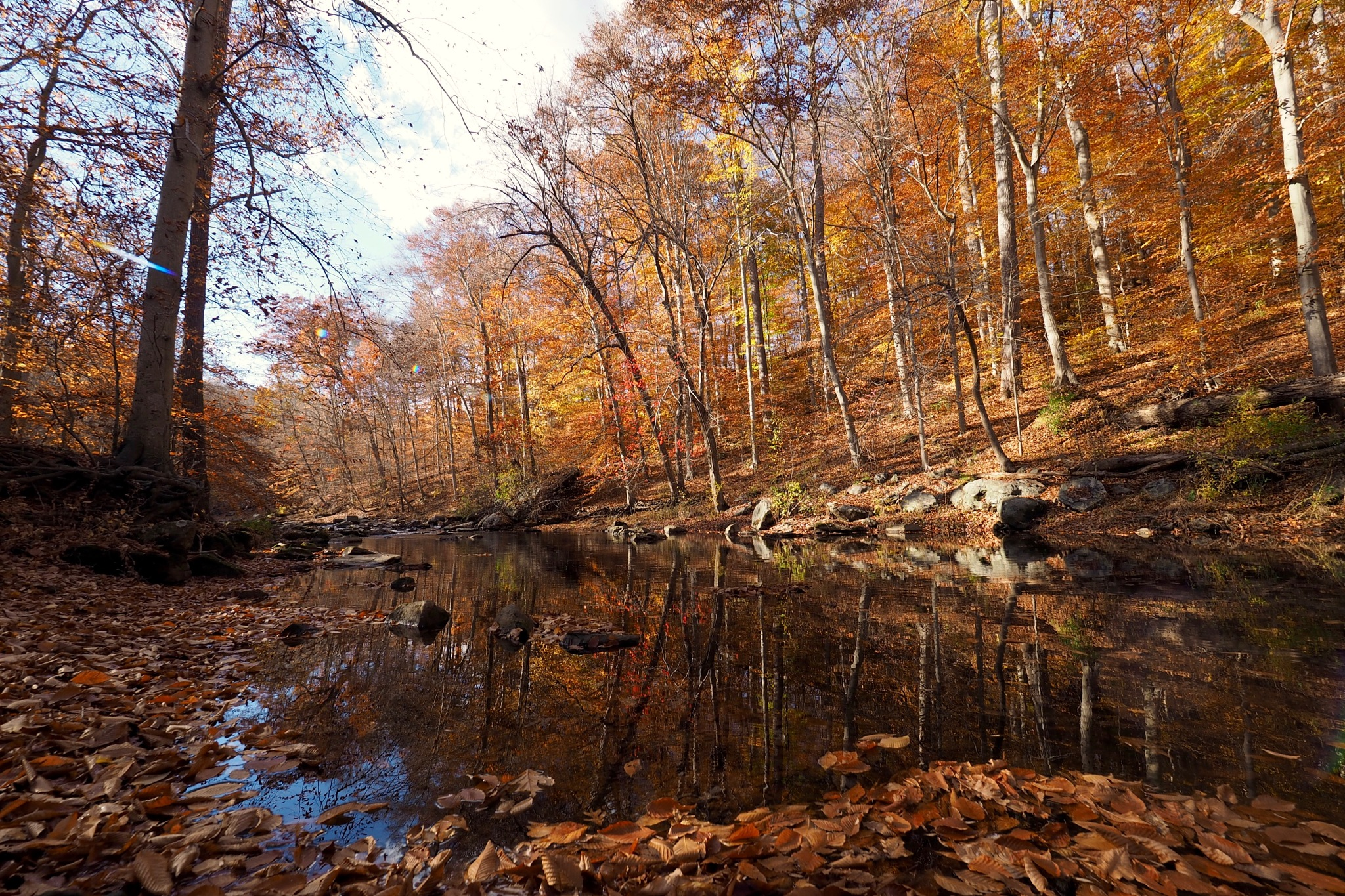Creekside by Shawn456