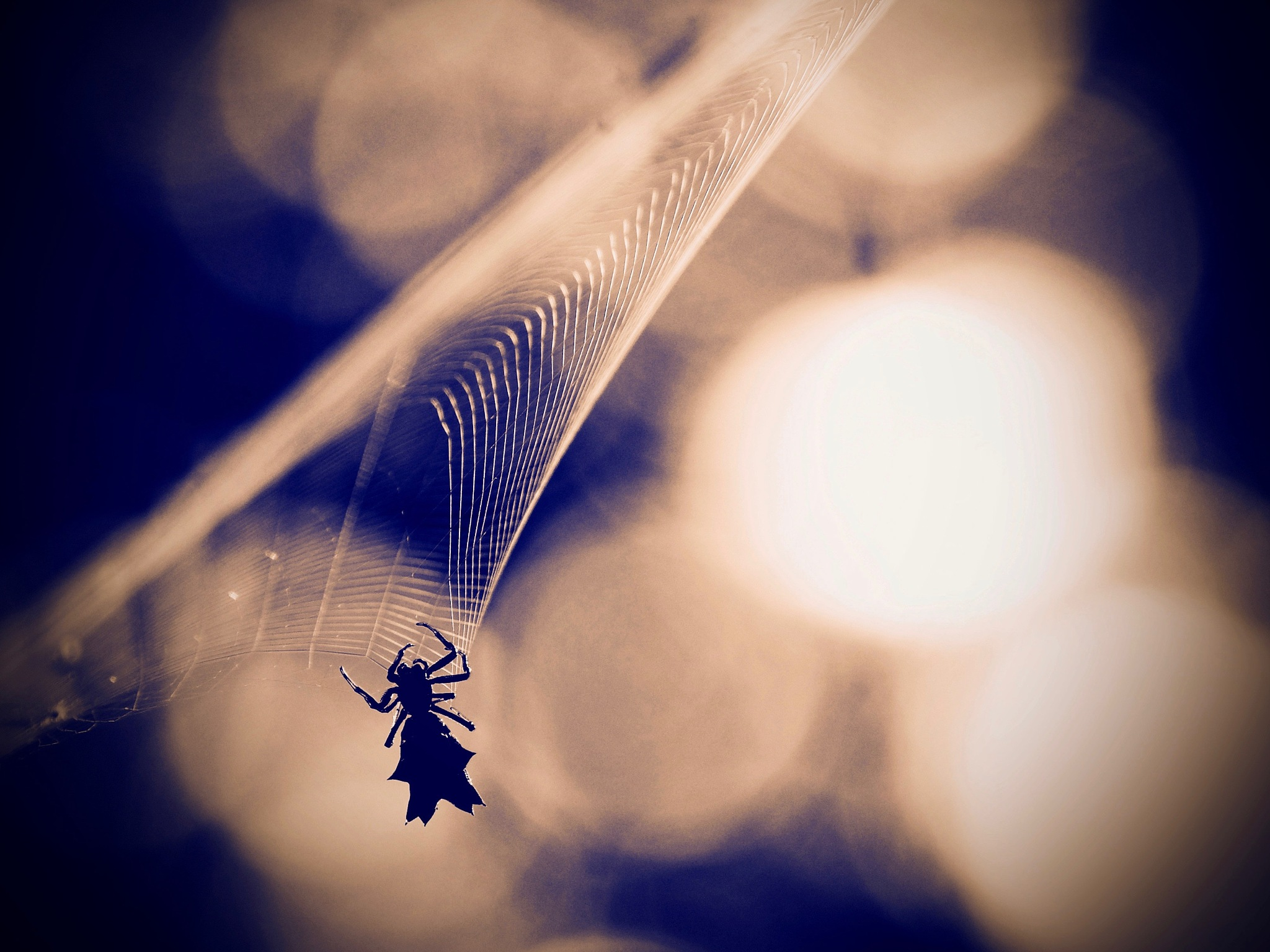 Web Spinning by Shawn456