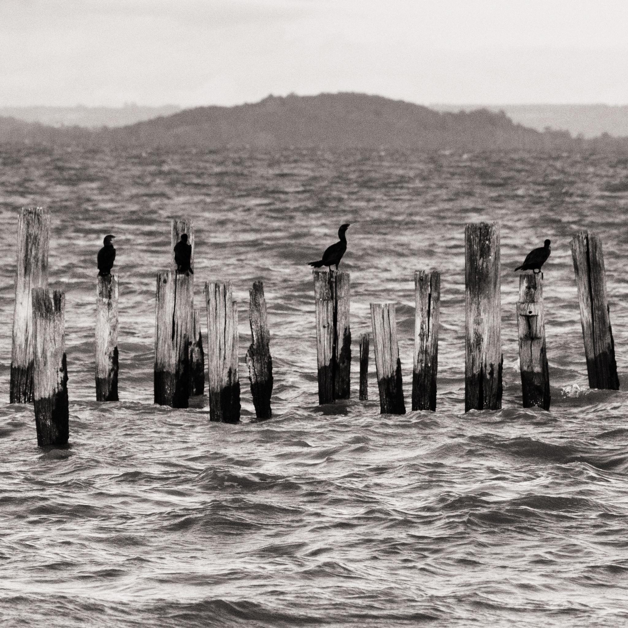 Barra do Ribeiro clippings by williancorrea