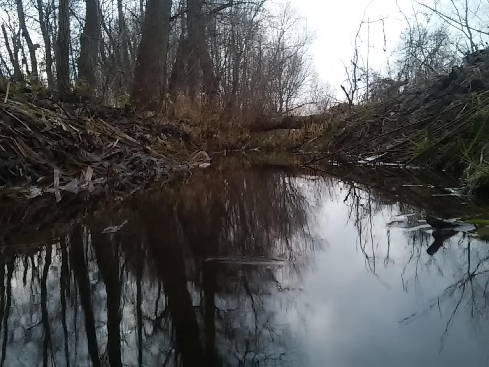 My little river by ScreepsEye