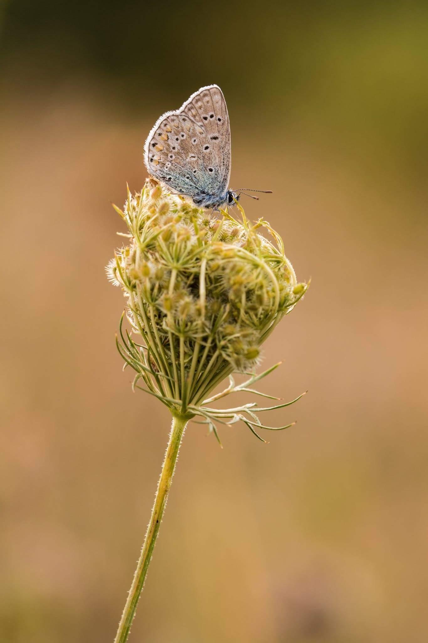 papillon by abeille77