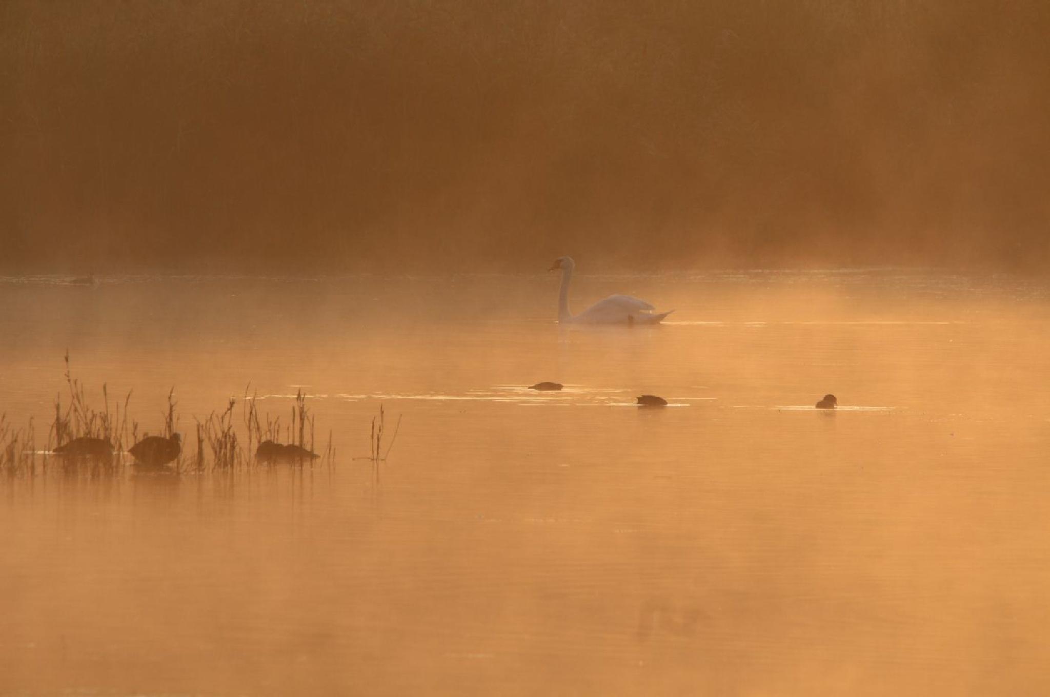 L'aube sur un lac by abeille77
