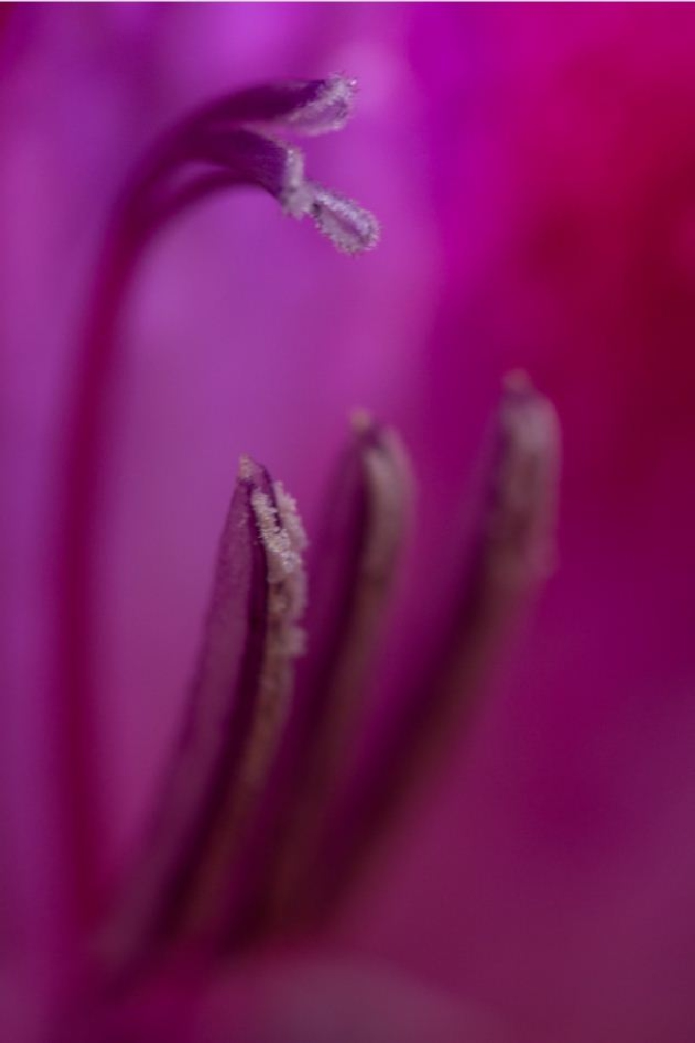 Macro by abeille77