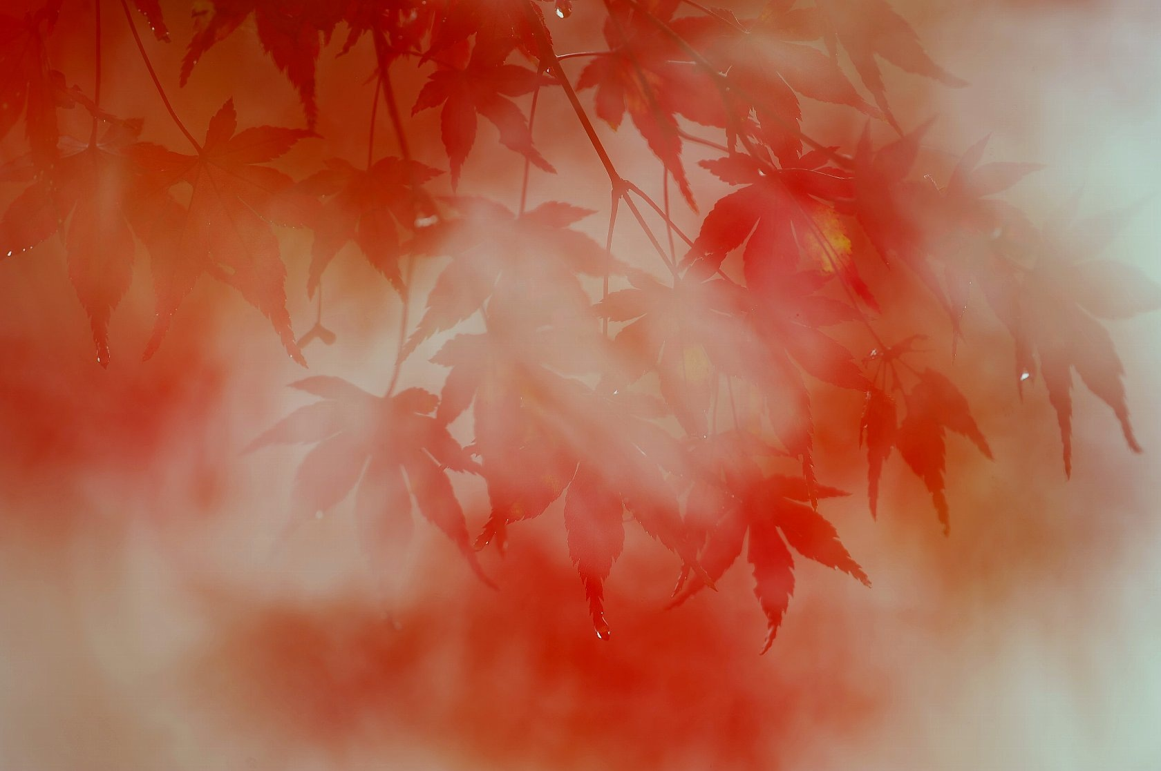 Untitled by Syuki Eita