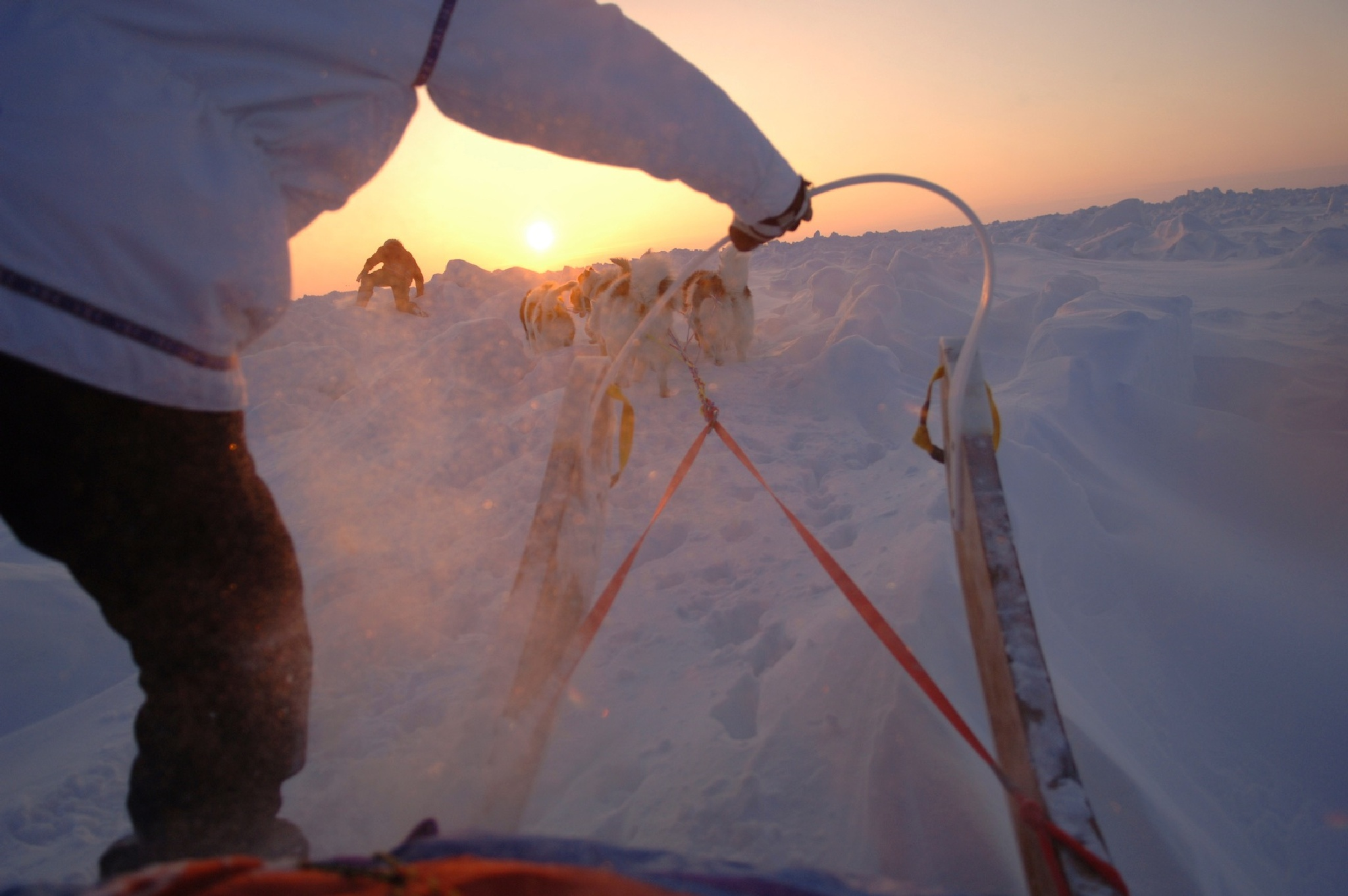 Arctic Ocean, Dog Team by Martin Hartley