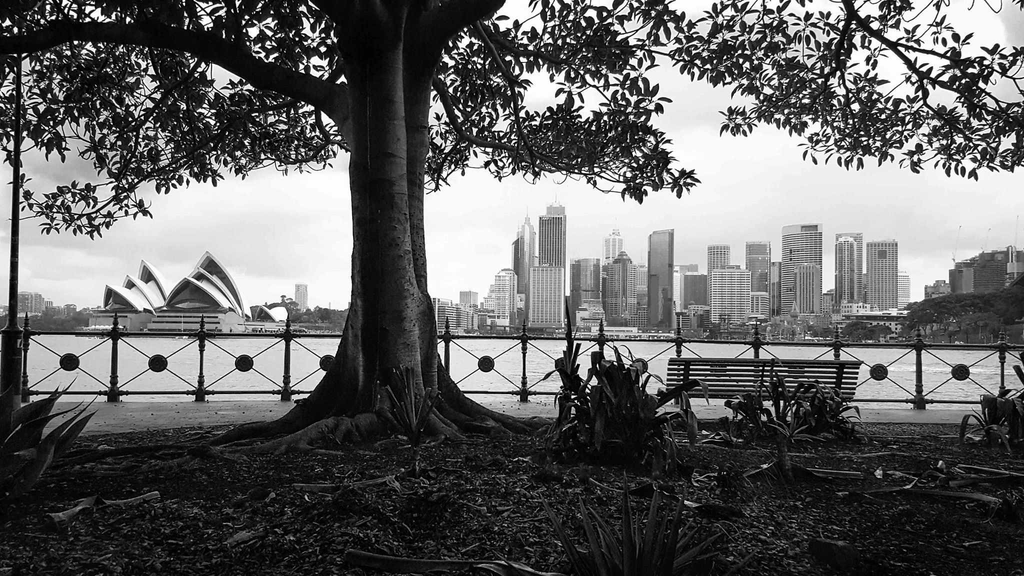 Milsons Point 2 (City) by Adam Rybka