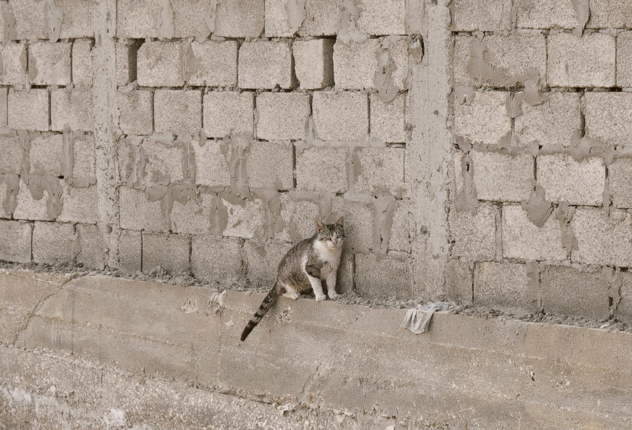 Сat & The Wall by Hamza  Horol