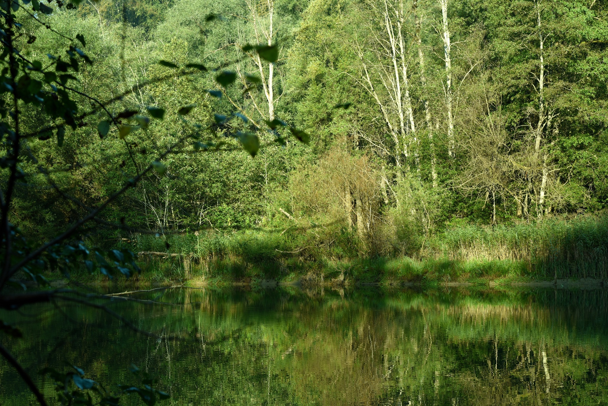 the river between trees by Liliane Sticher