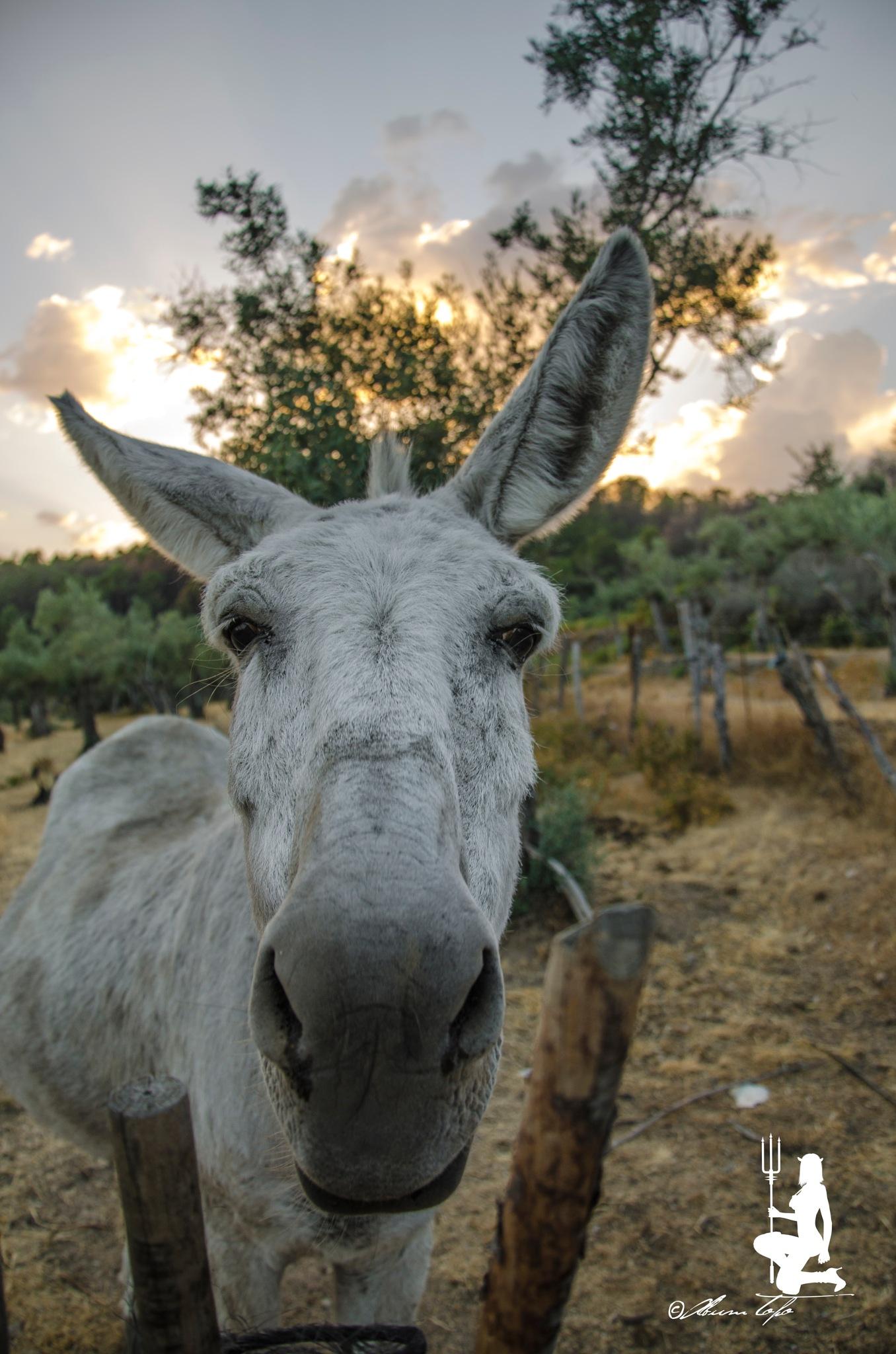 Donkey by Sergio Franco Topo