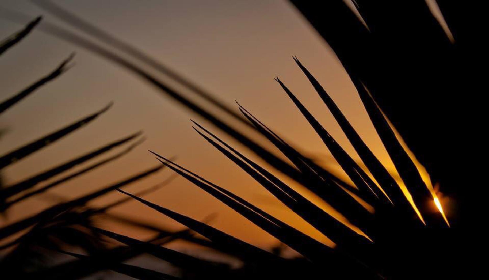 Sunset  by Irene Picaud