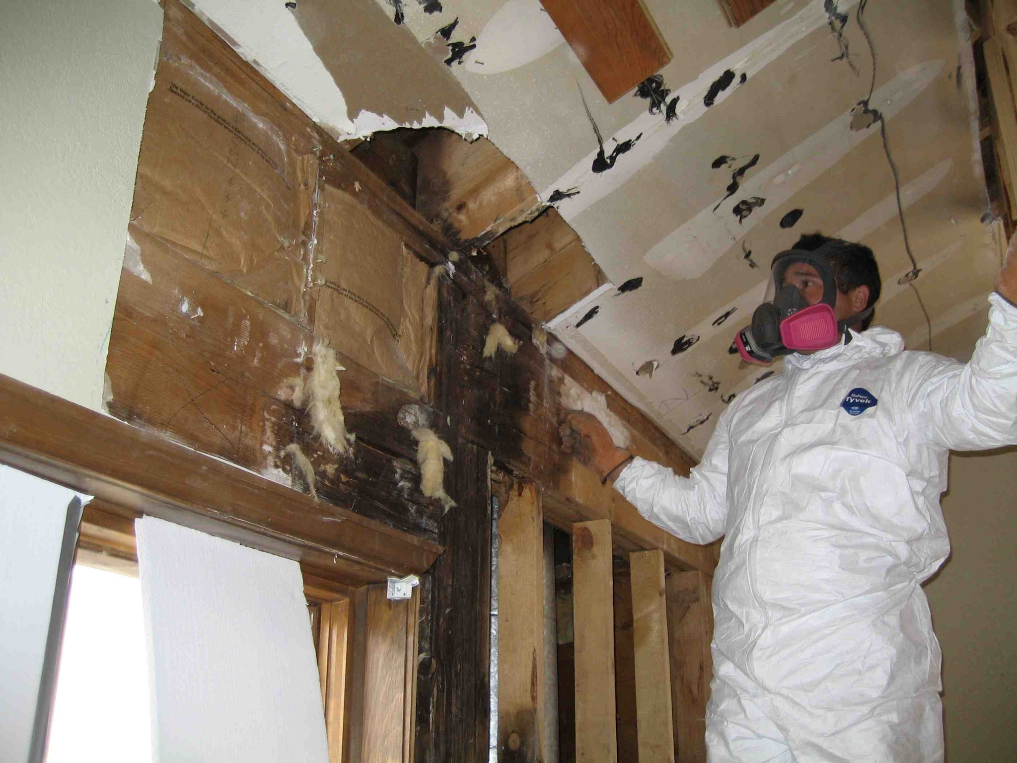 Mold Removal by proabatement1