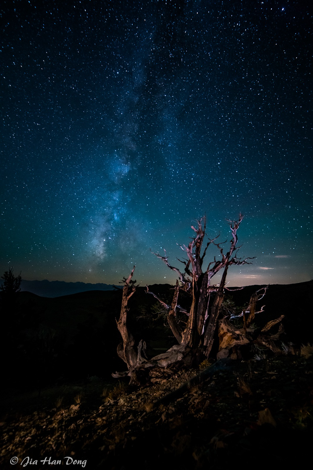 Ancient Bristlecone Pine under Milky Way by Jiahan Dong