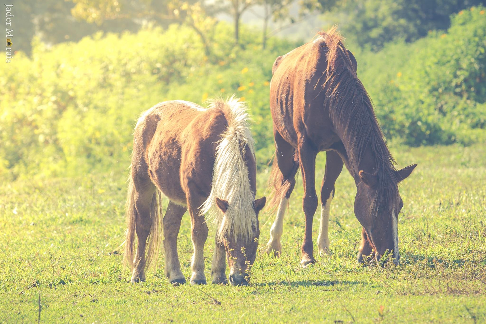 Horses by Jader Morais