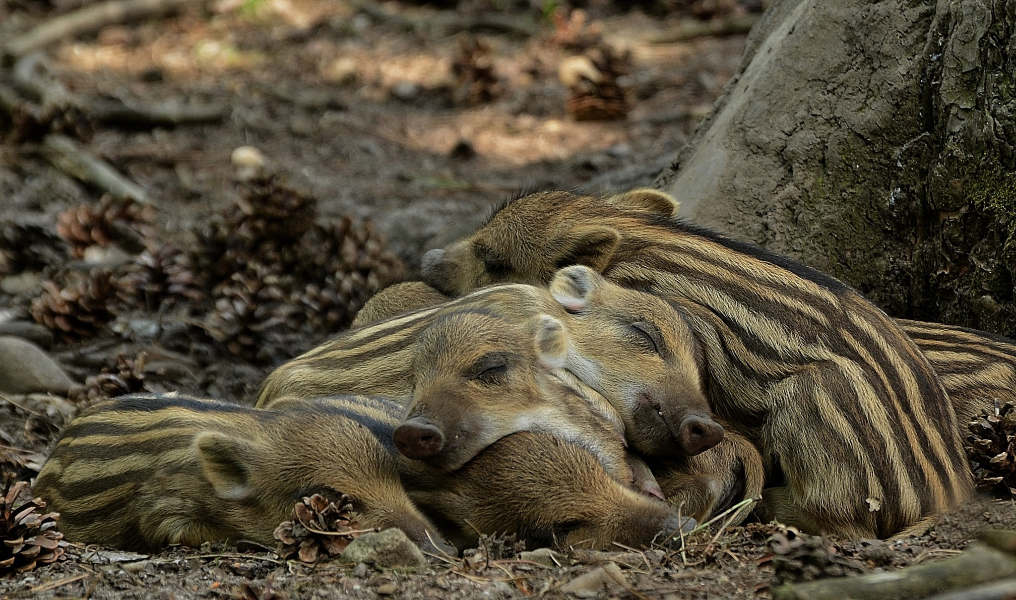 Cute pile of babies... by Linda Manzaneque