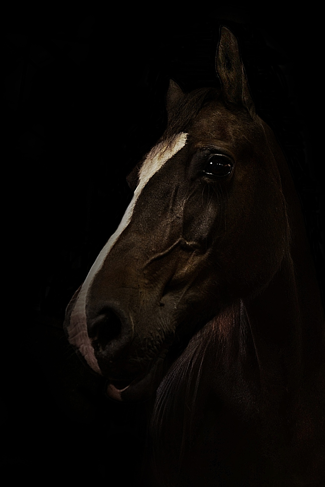 horse in stable/black background  by Linda Manzaneque