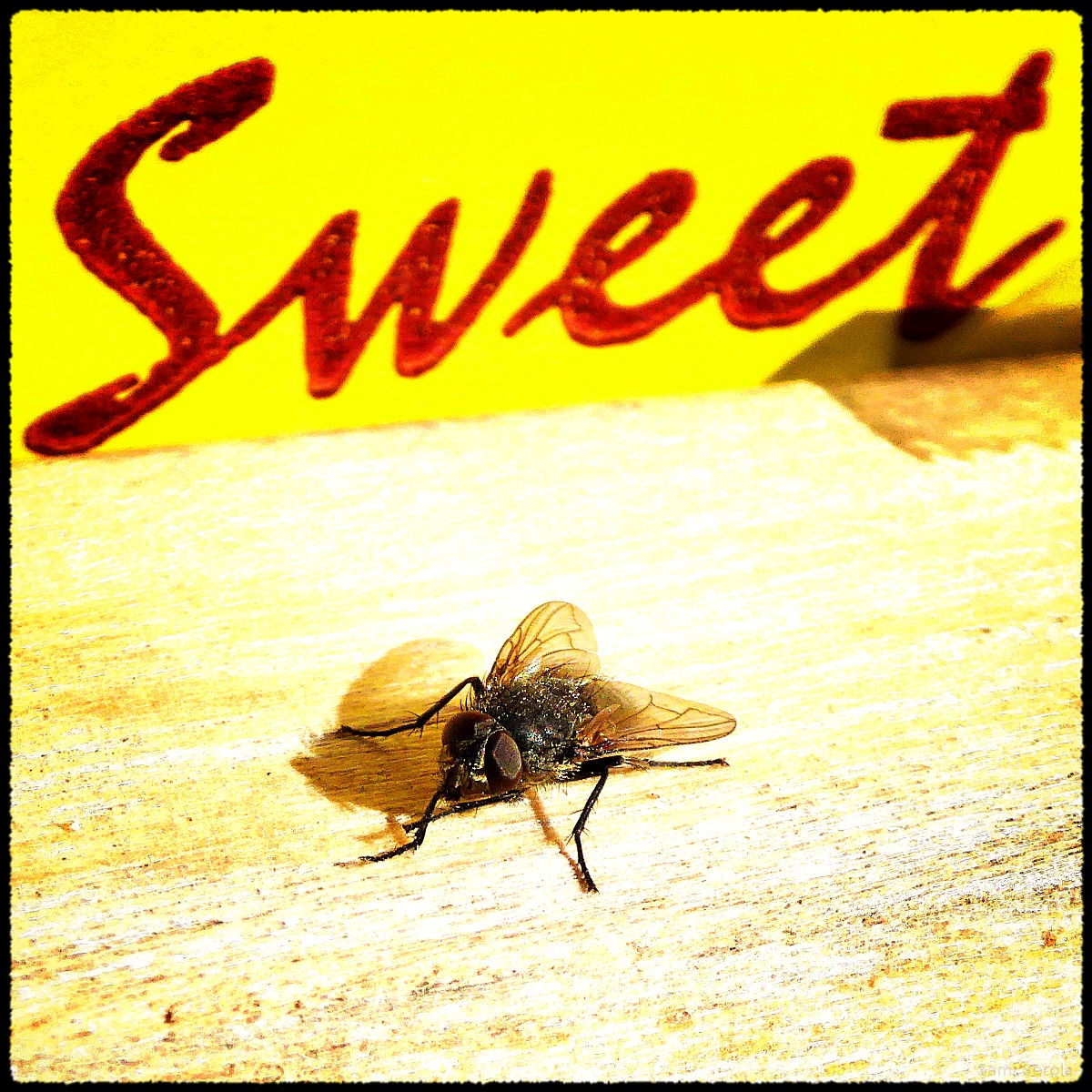 Sweet! by Sami Serola