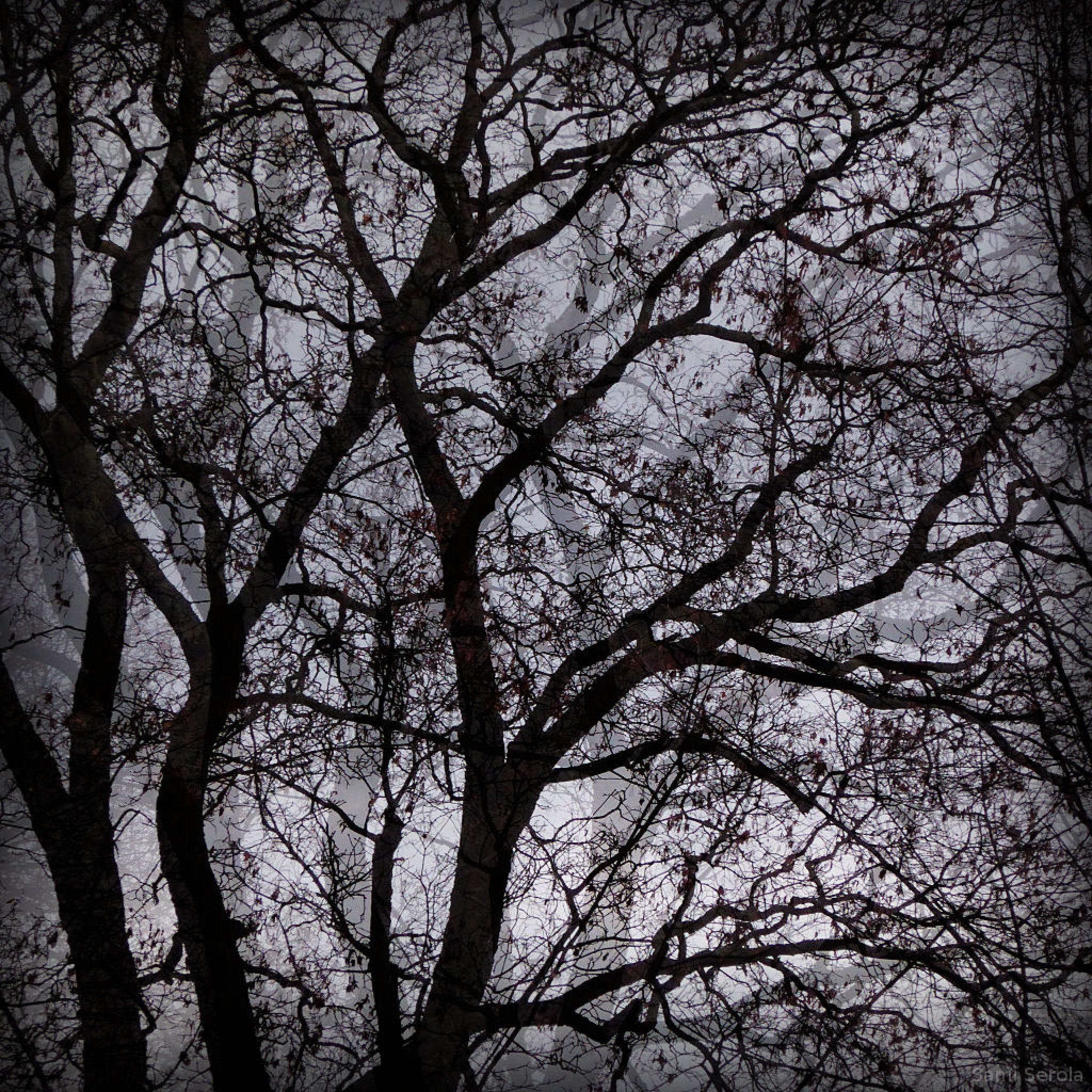 Trees in the park by Sami Serola