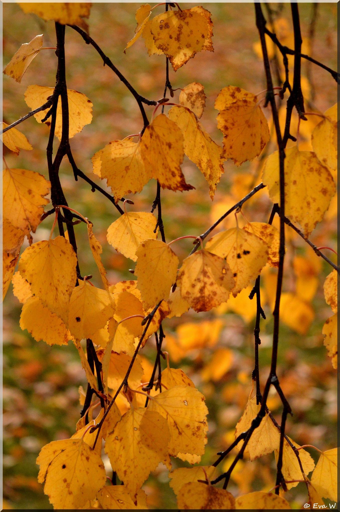 Golden  by EvaWiren