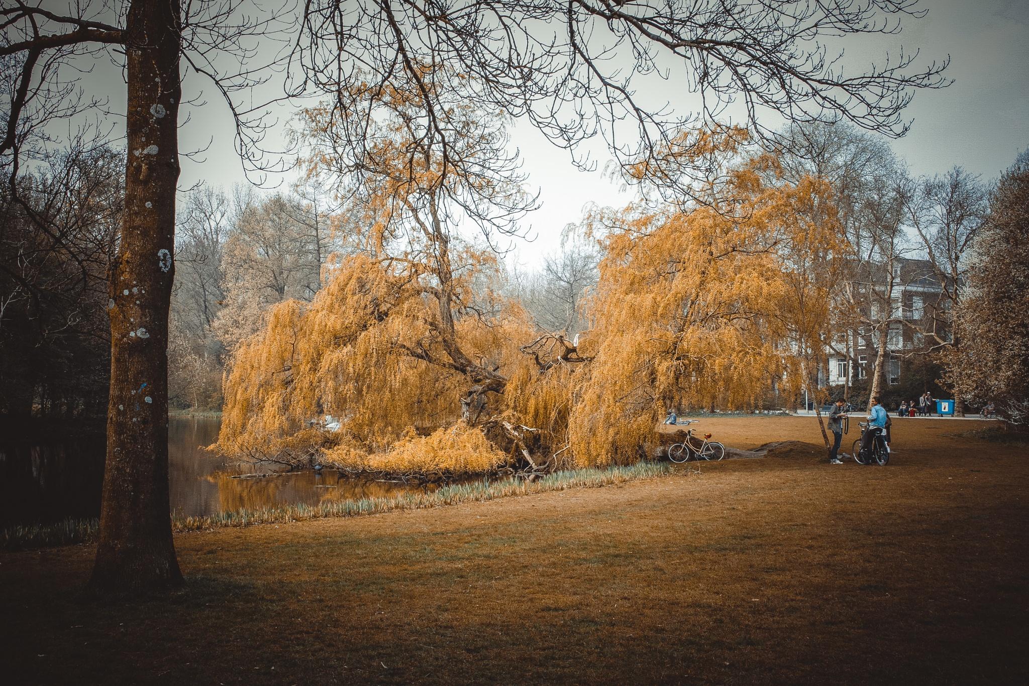 Evocative willow (Amsterdam) by Marco Cavataio