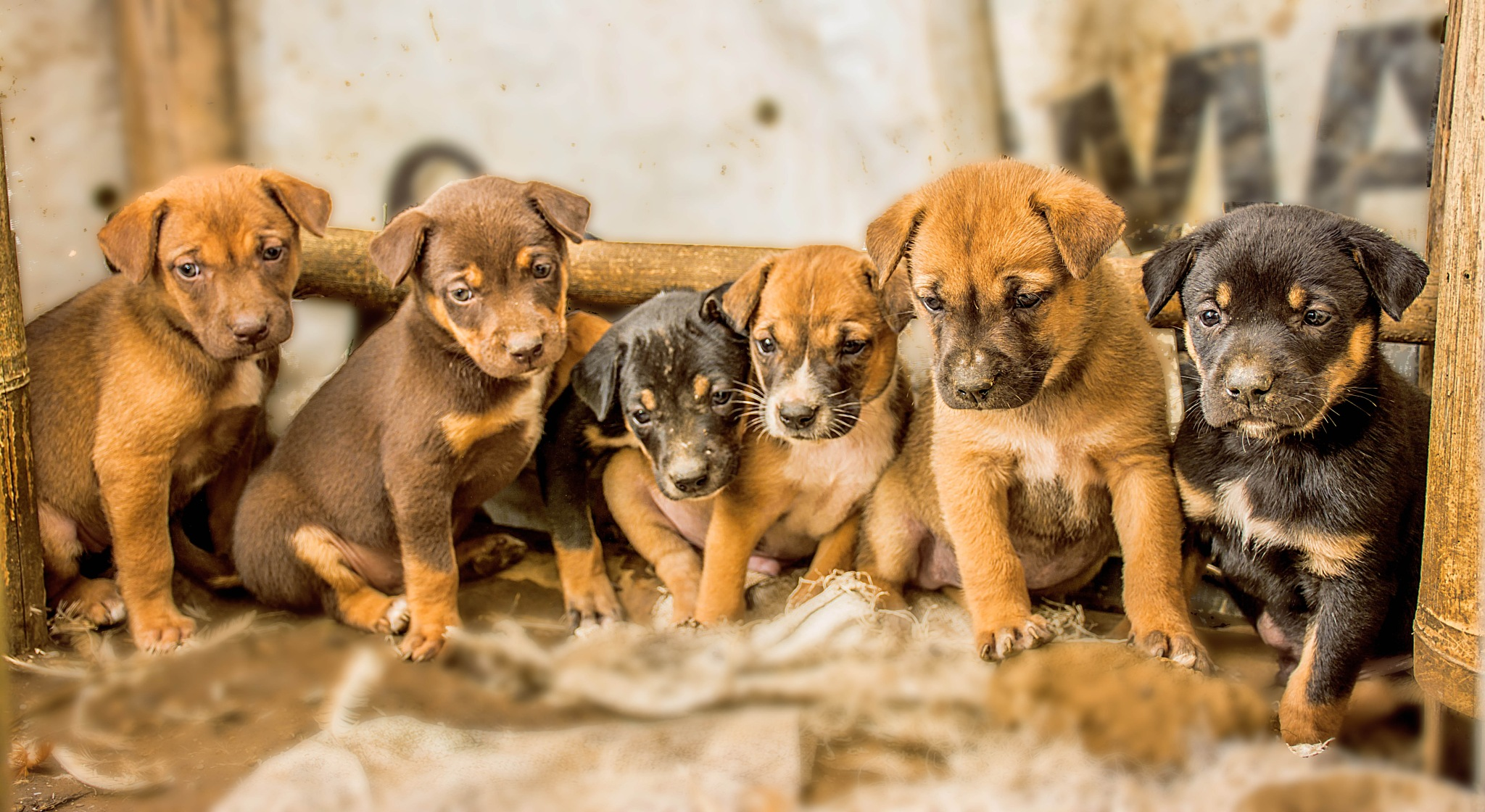 Puppies Big Family by Kriswanto Ginting's