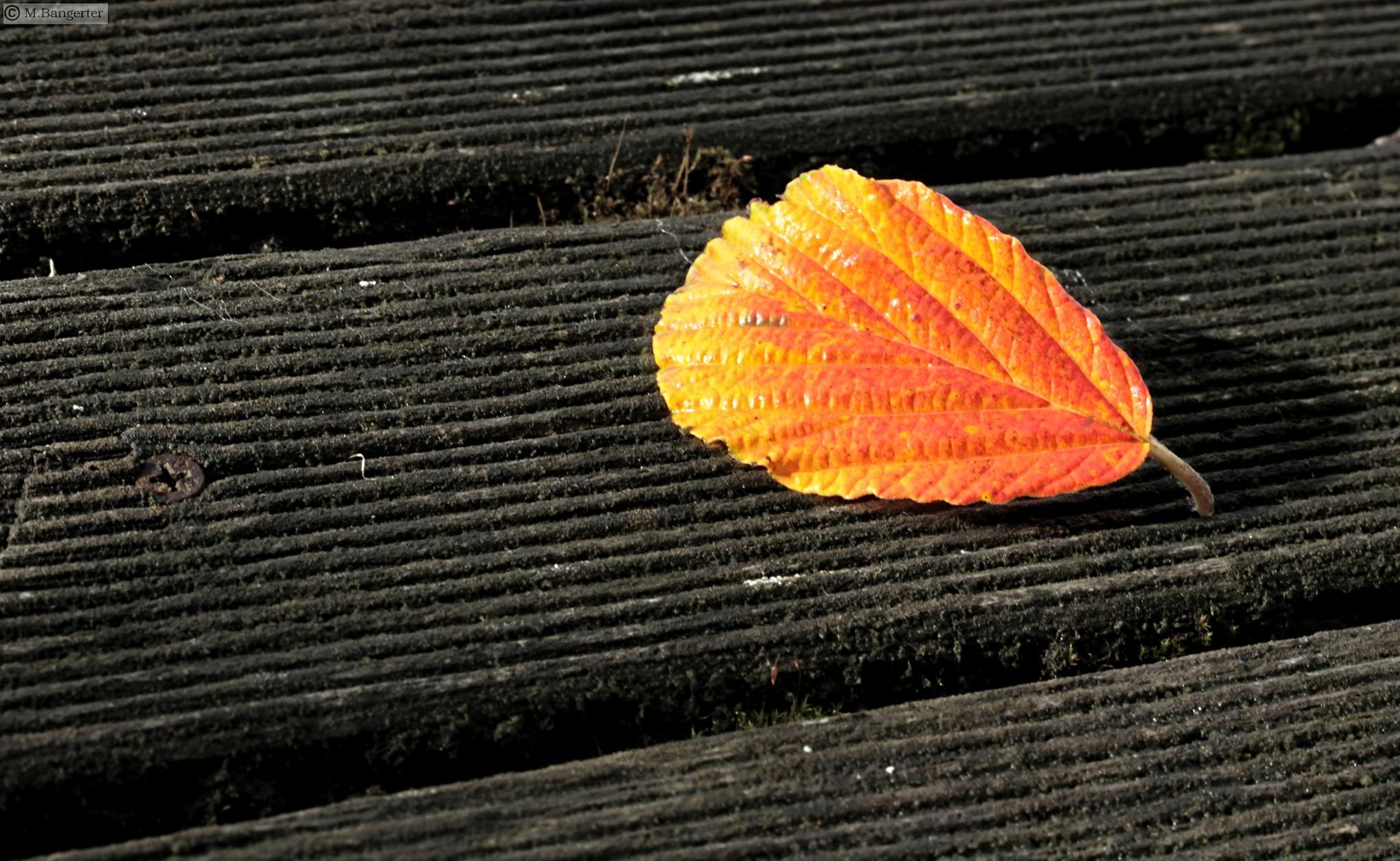 golden leaf by Michael