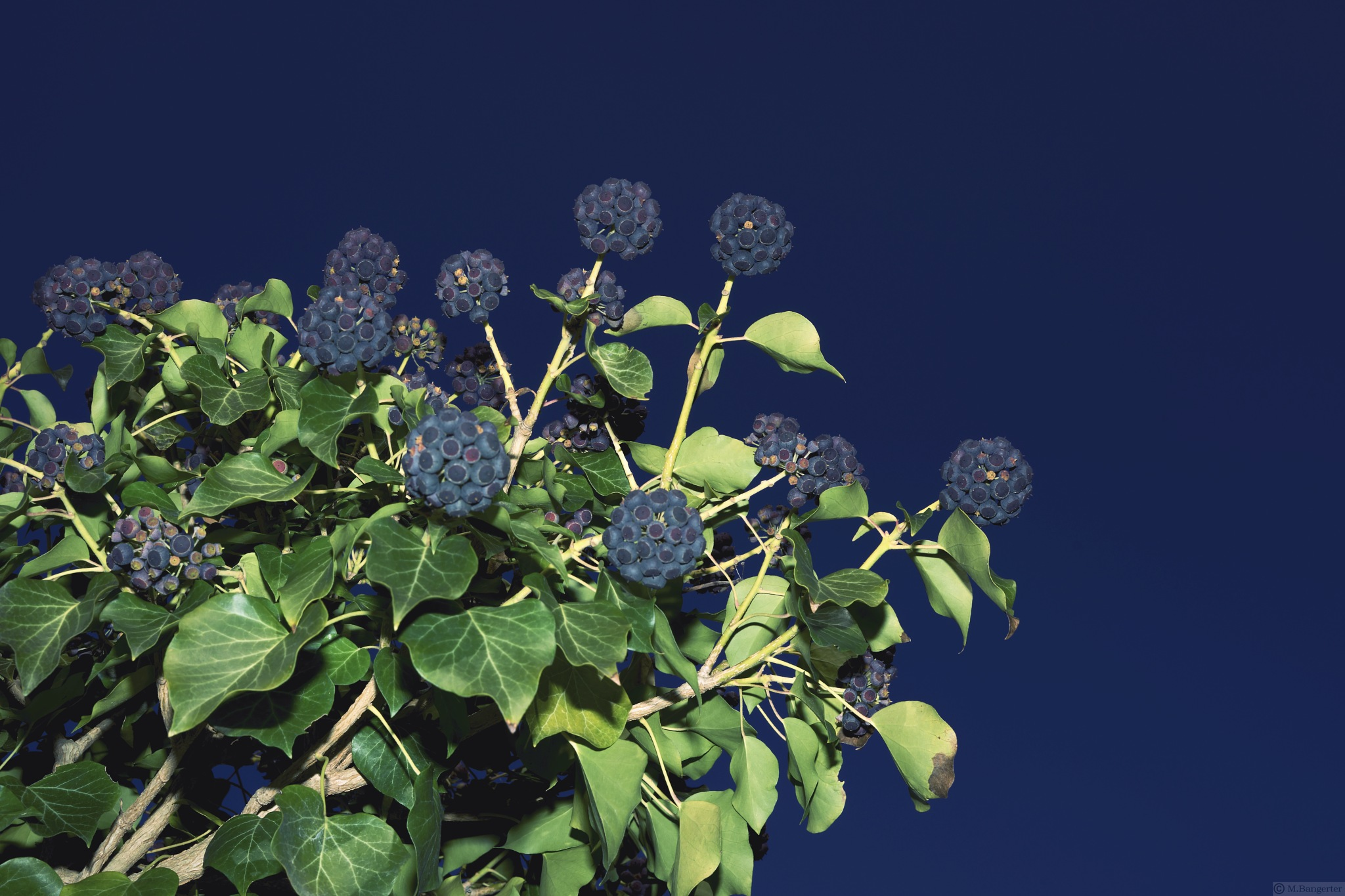 blue fruits by Michael
