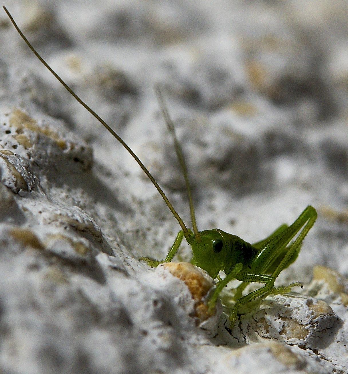 grasshopper baby by Michael