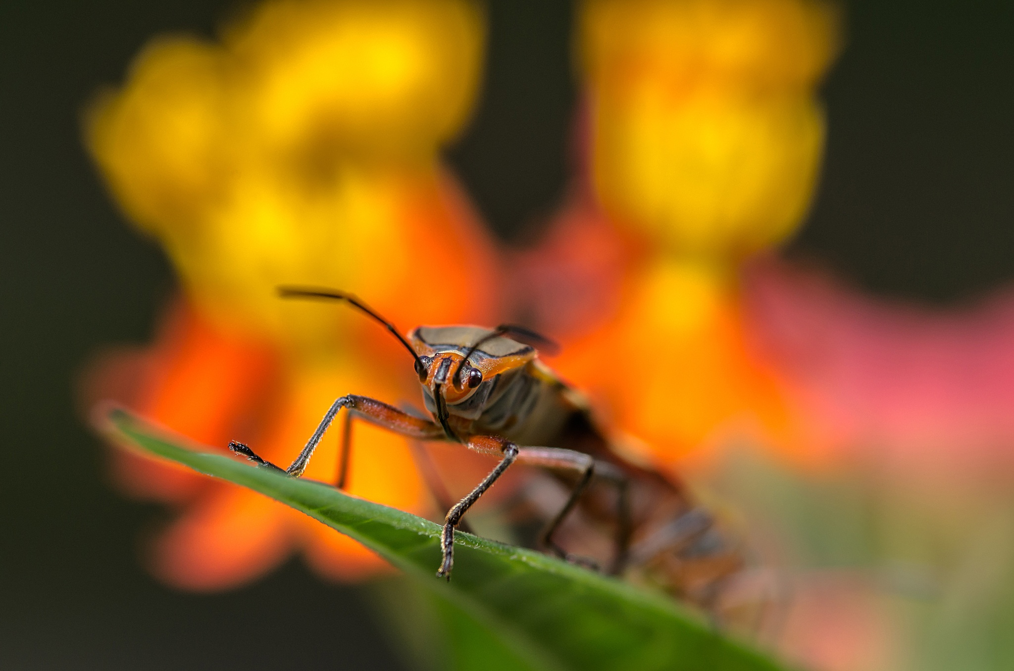 Insects by Junior Esteves