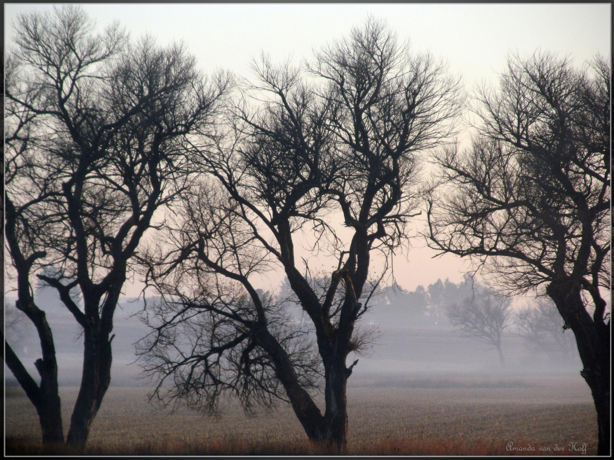 Winter... by amandavanderhoff9
