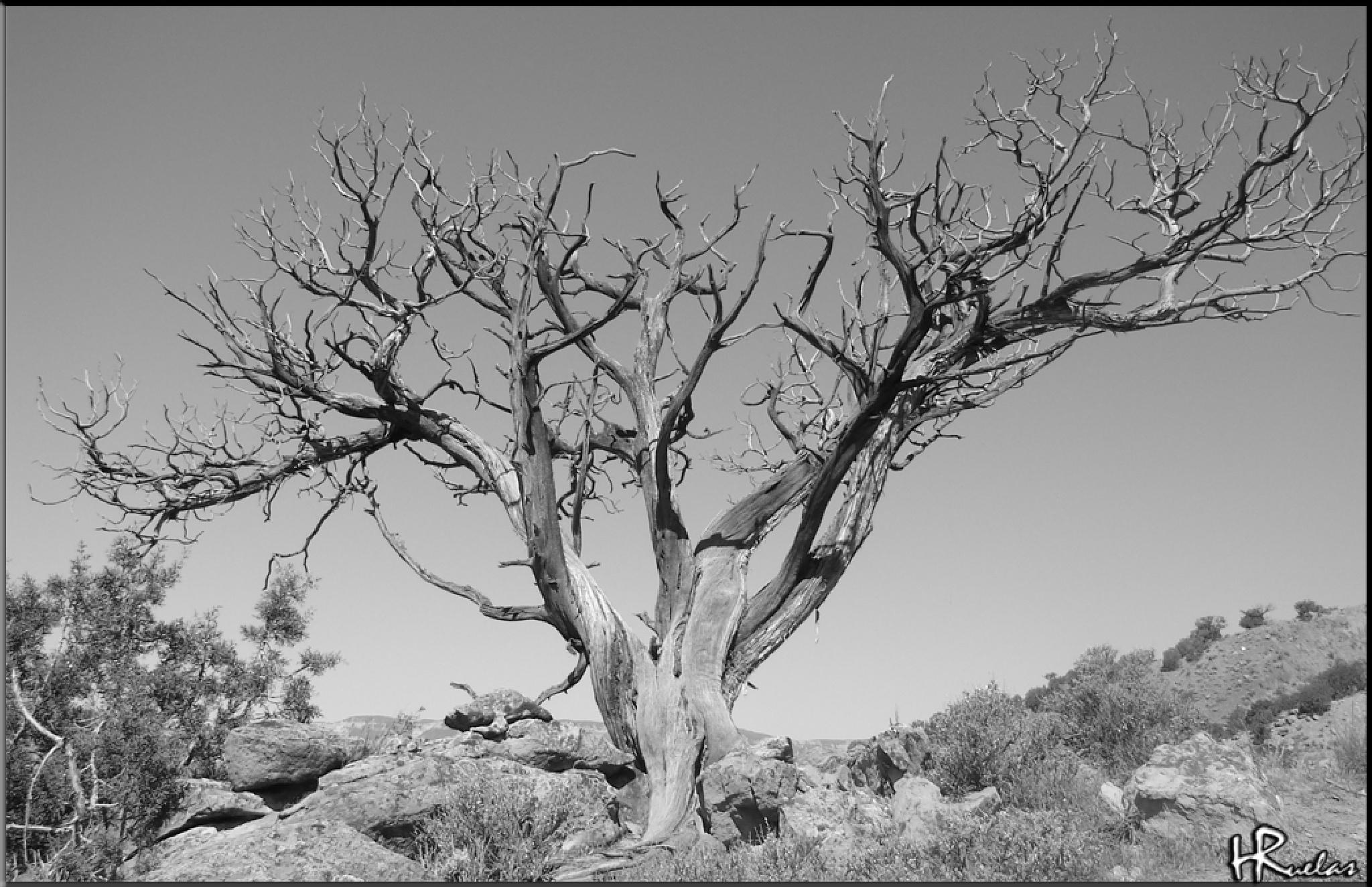 Dead Tree B&W by Hugo