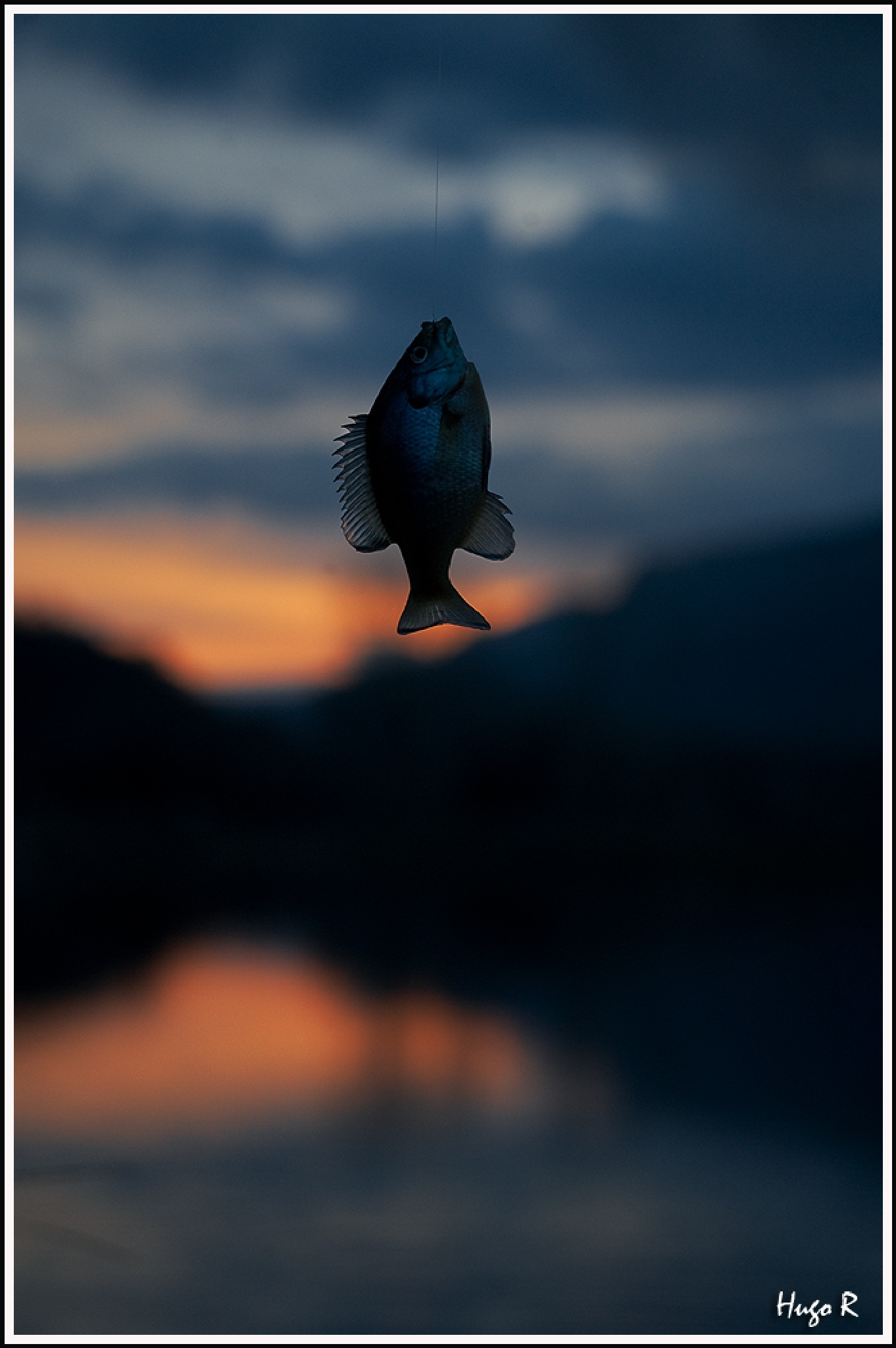 Fishy Sunset  by Hugo