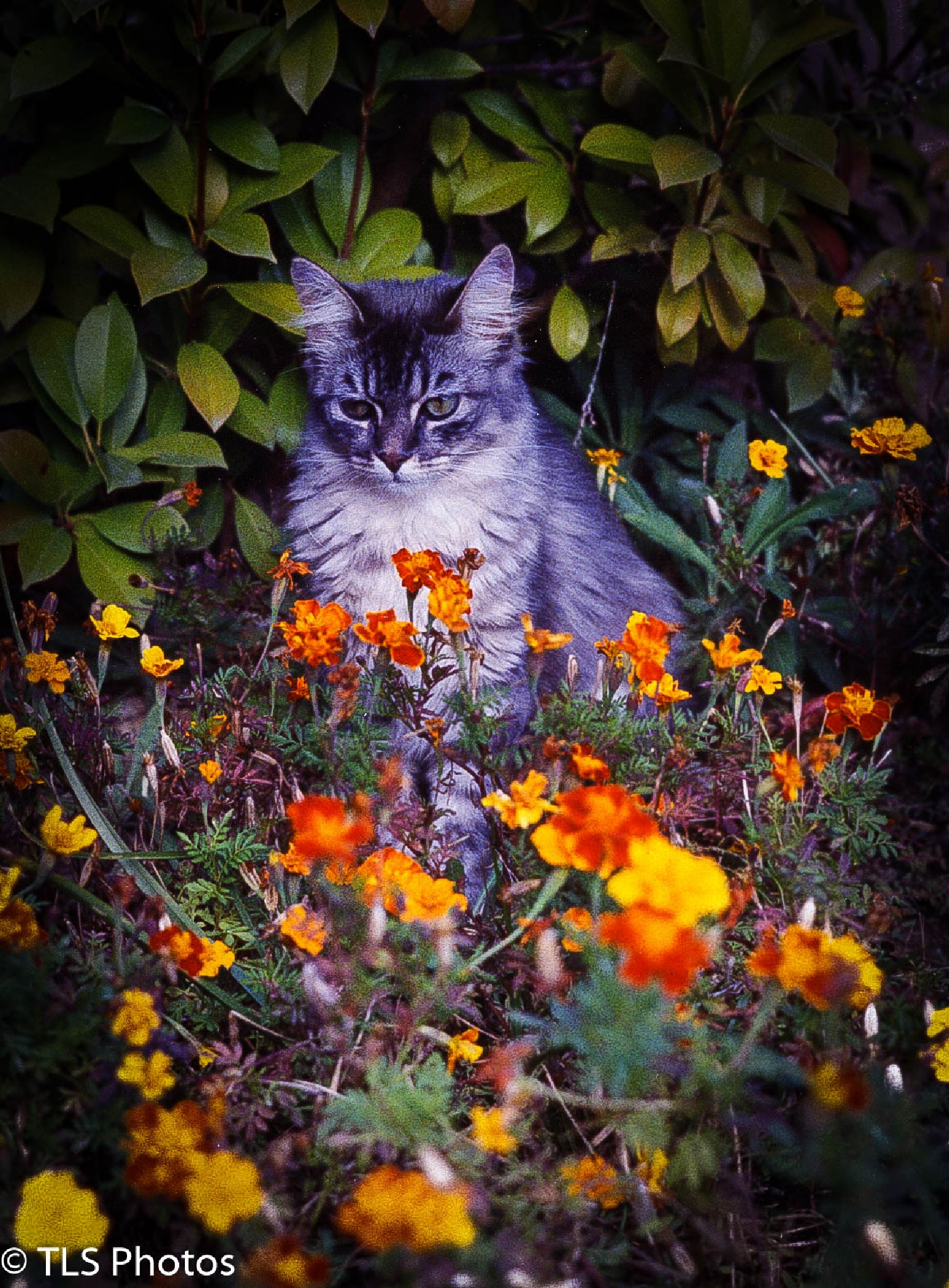 Candace's cat by Terry Smith