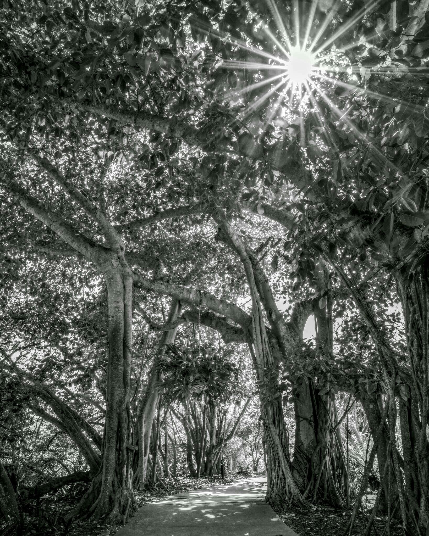 Garden path by Tamdan