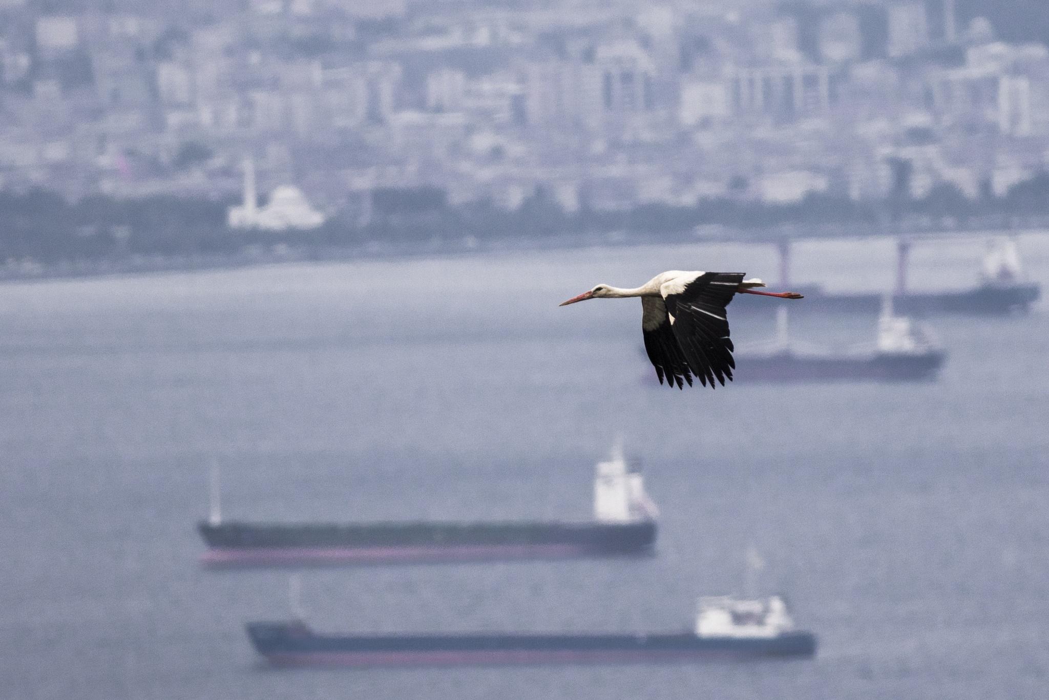stork by Zafer Kara