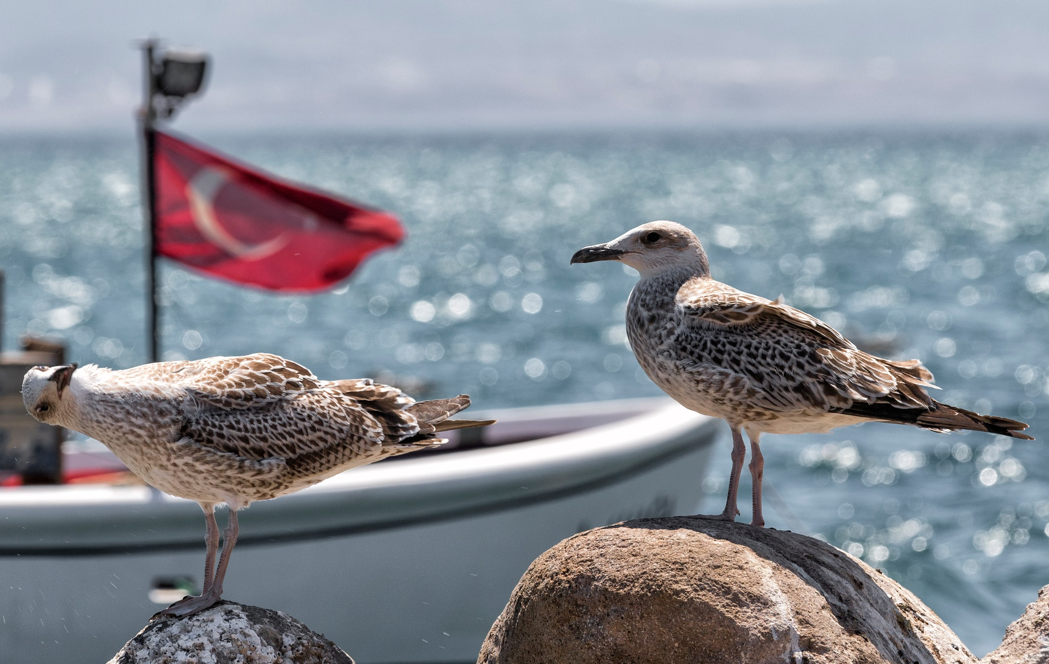 seagulls by Zafer Kara