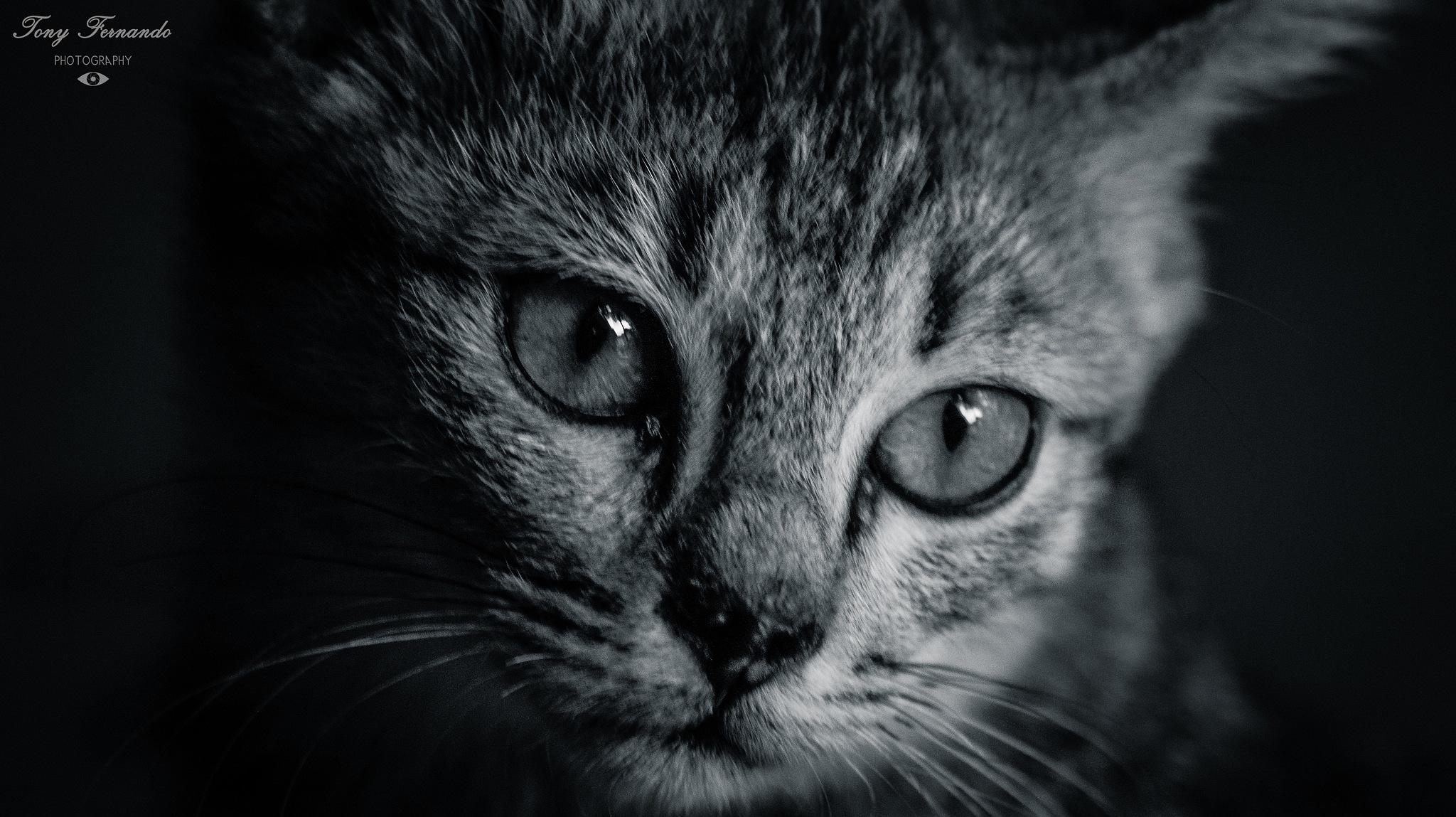 Cat portrait.... by Tony Fernando