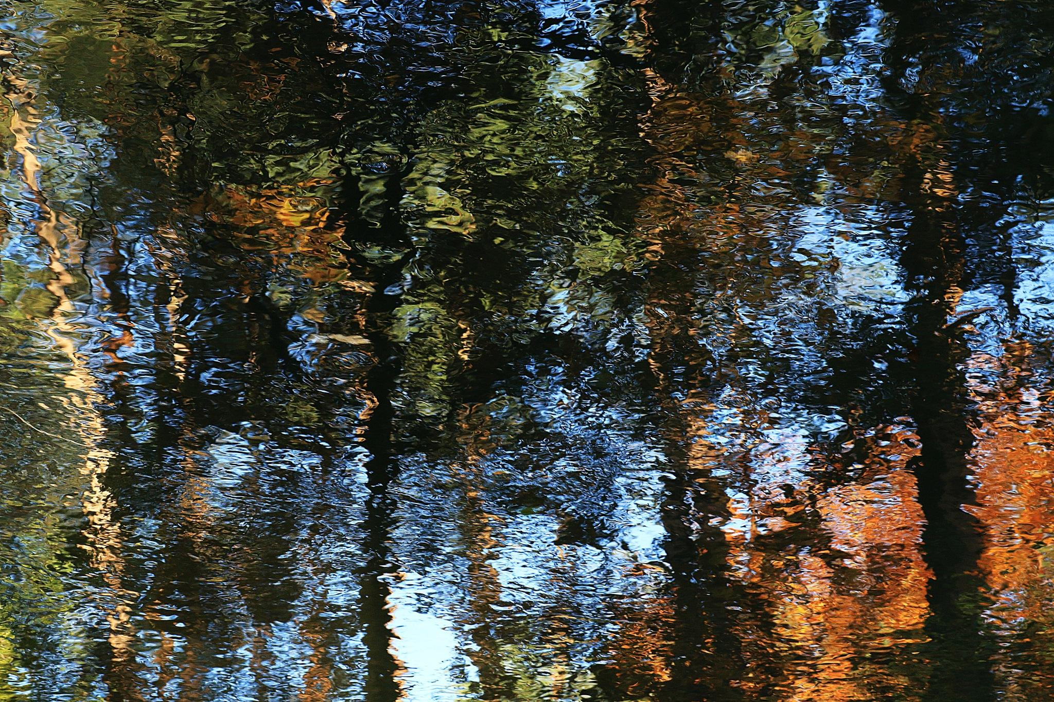 Autumn forest by JAKOKTO PAUKAS