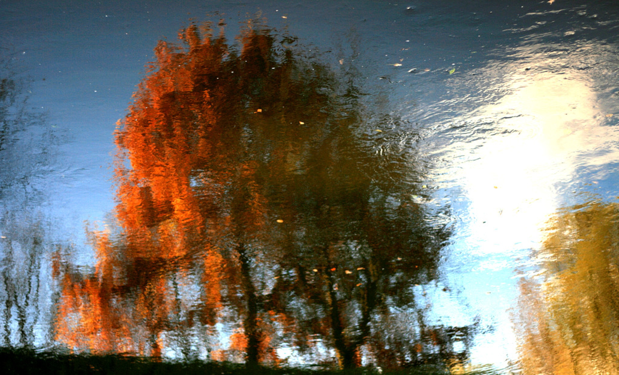 Autumn tree by JAKOKTO PAUKAS