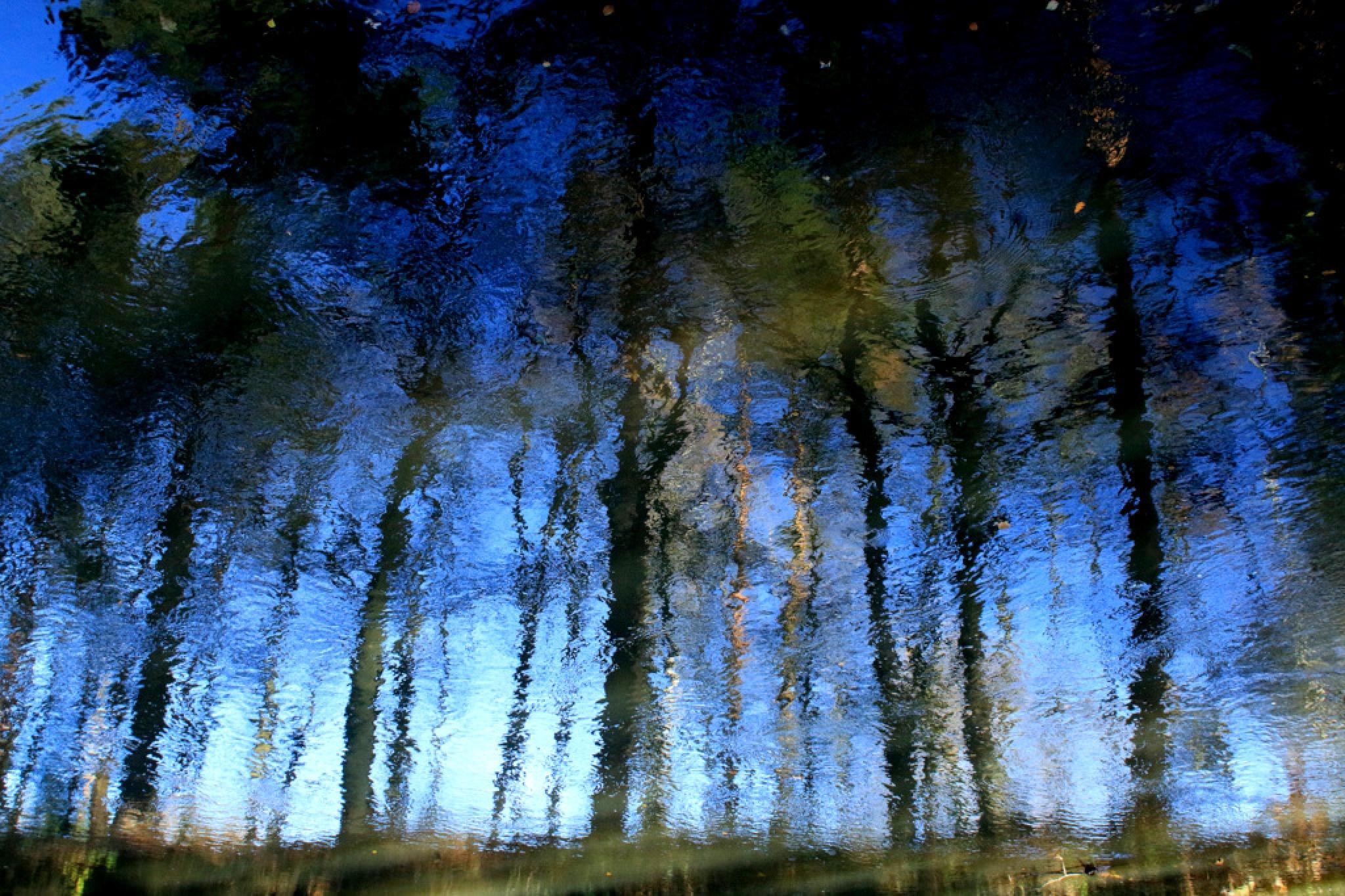 Forests of Goleniów by JAKOKTO PAUKAS