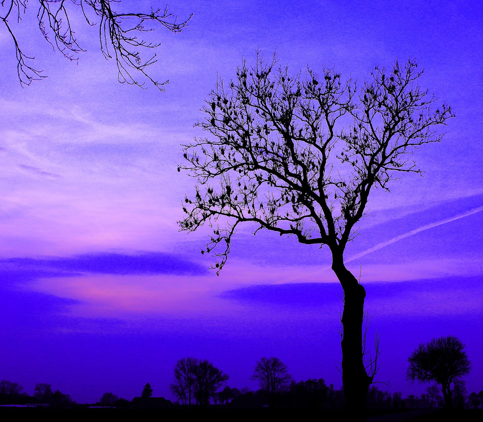 purple sky by JAKOKTO PAUKAS