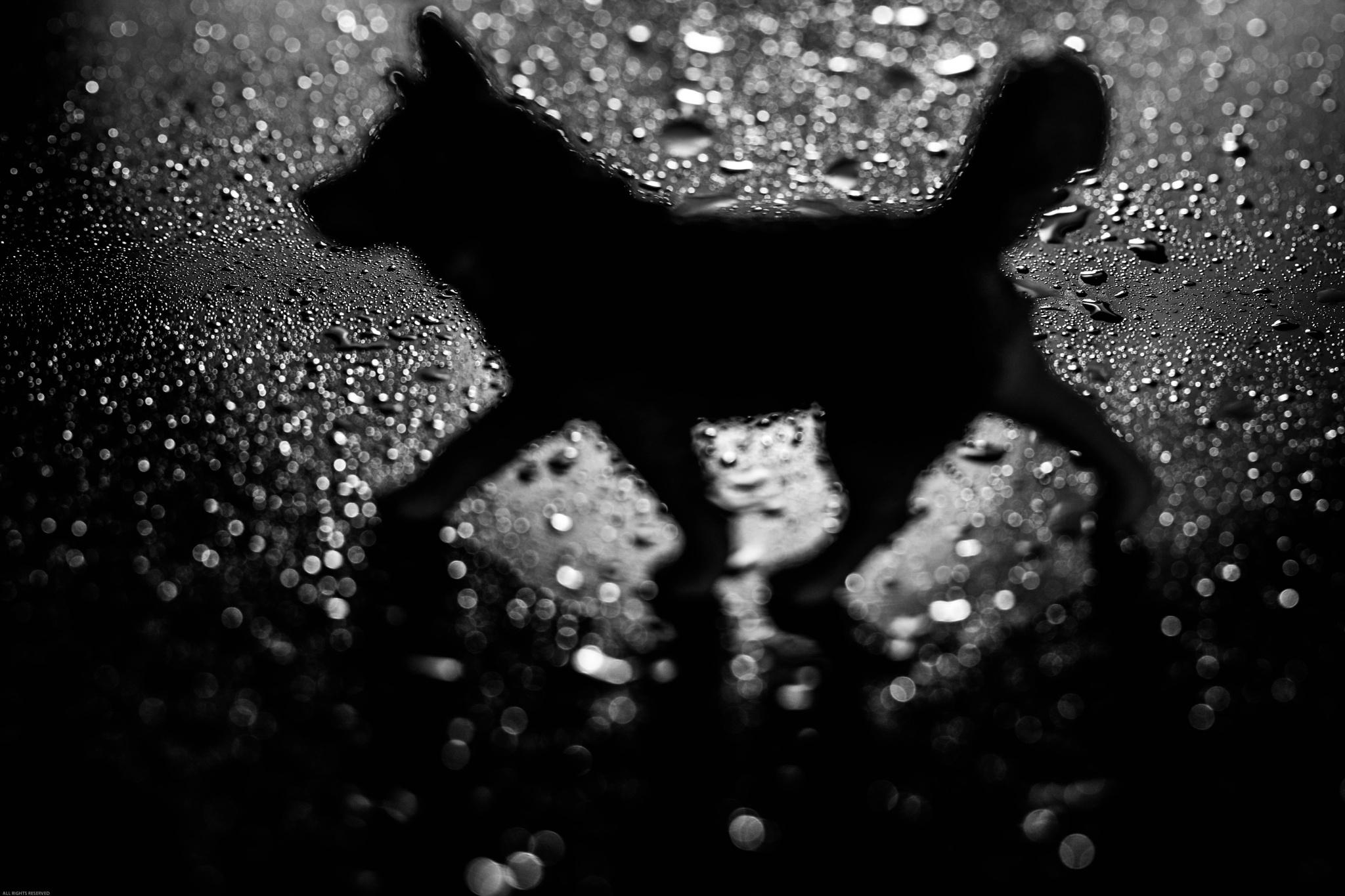Rain Dog by RobertStanley