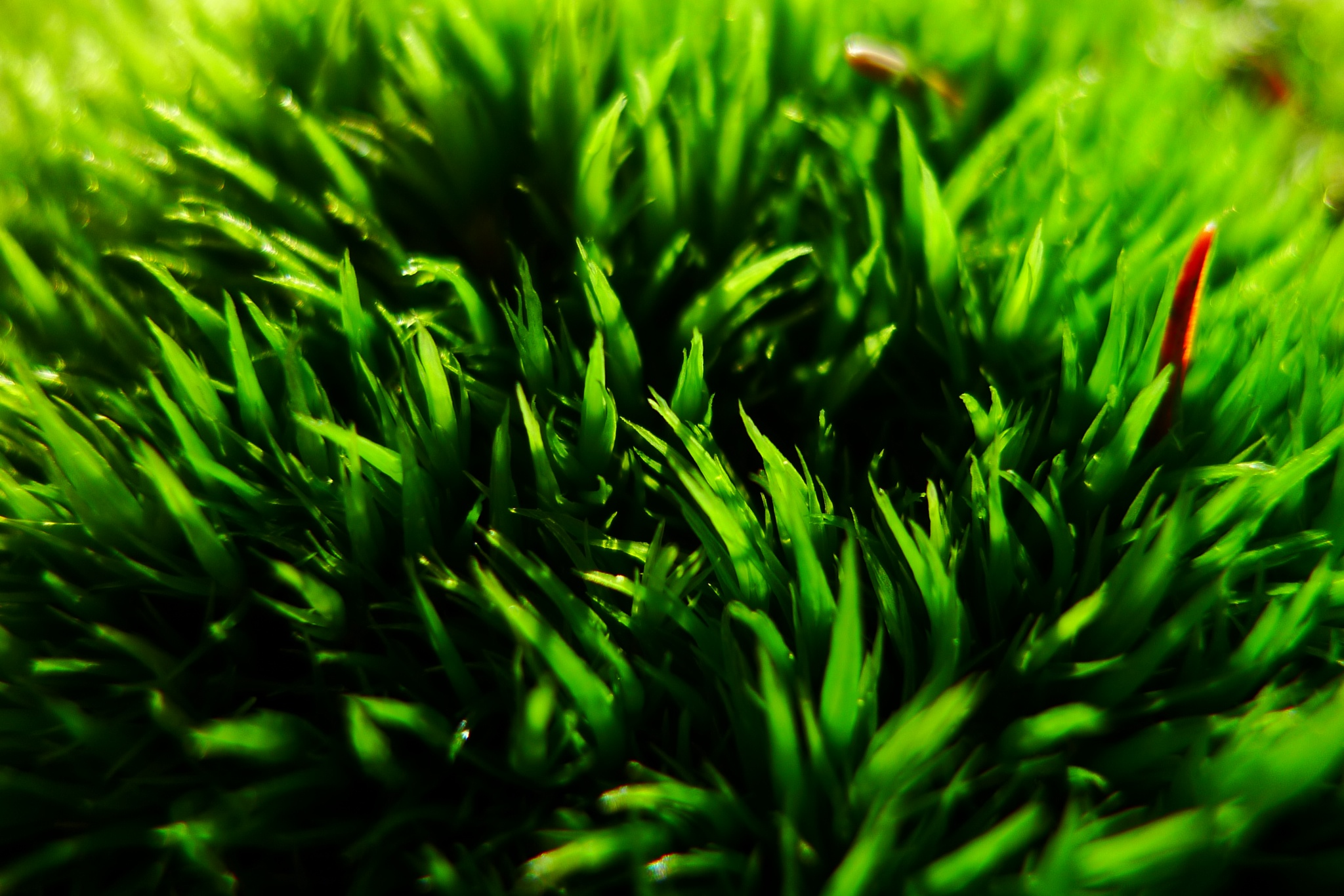 carpet of moss by solenoid