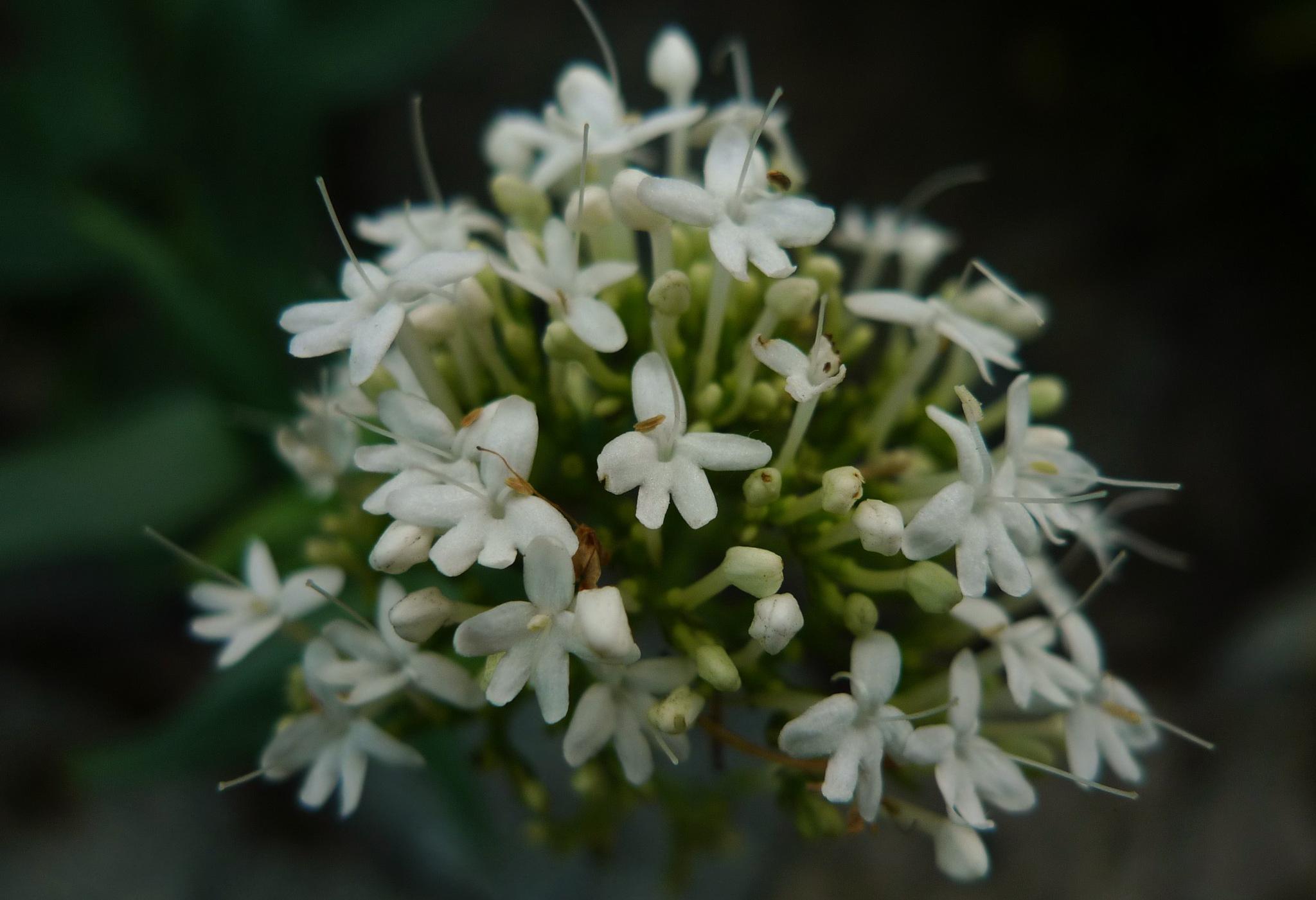 flower 26 by solenoid