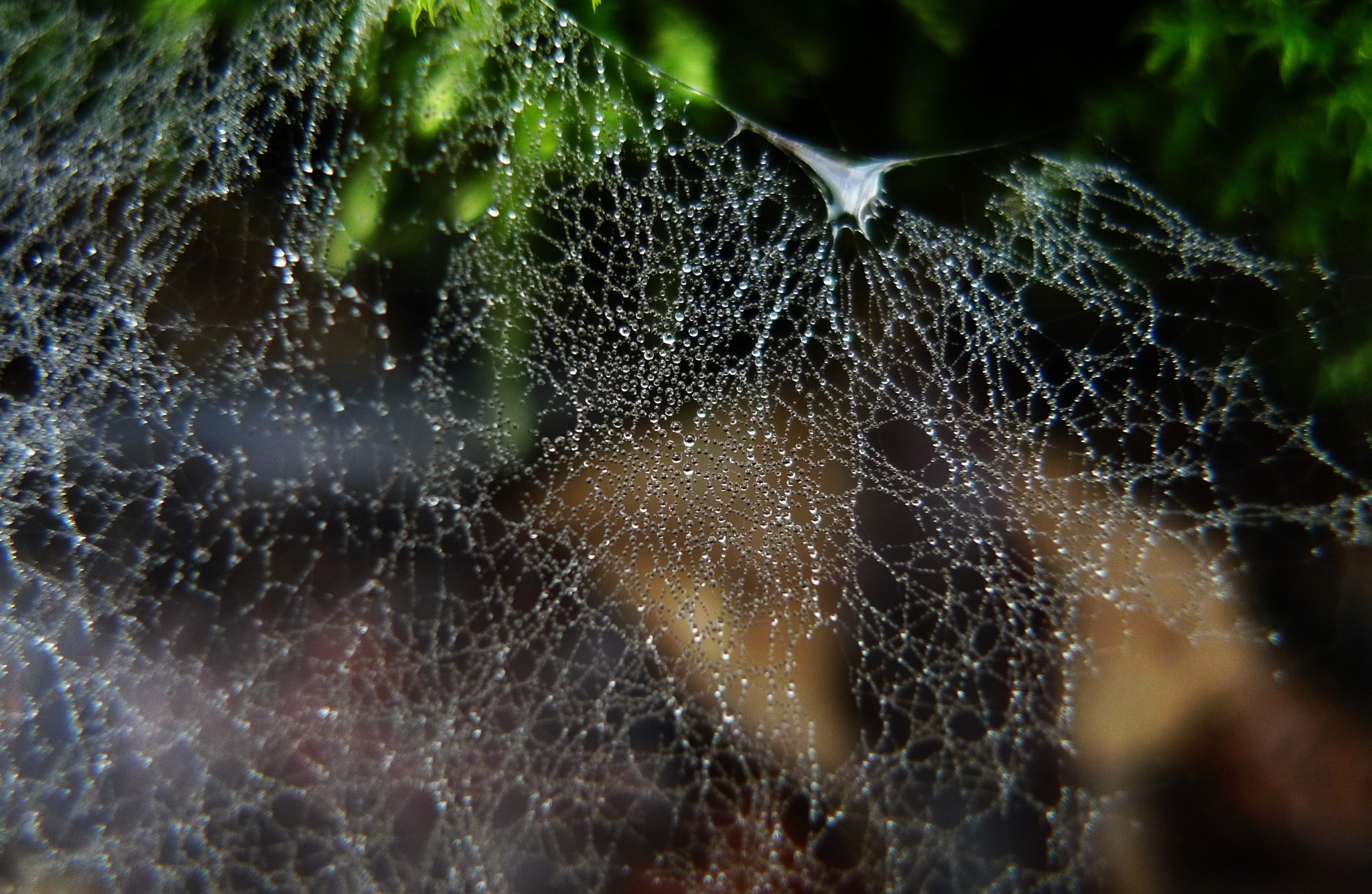 complex web by solenoid