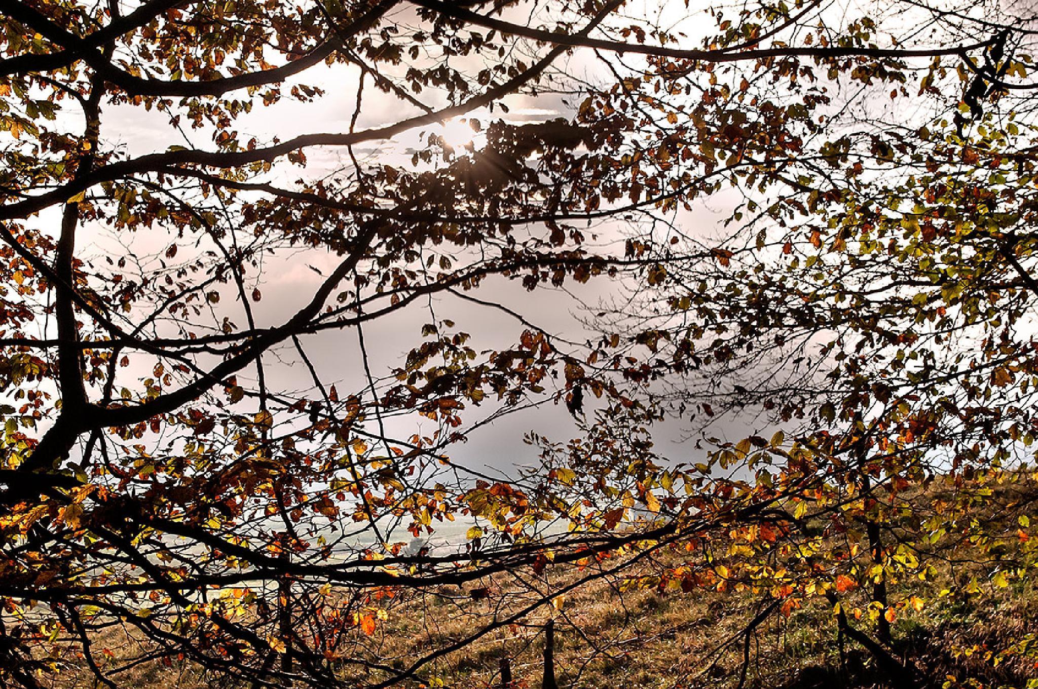 autumn by Amerigo