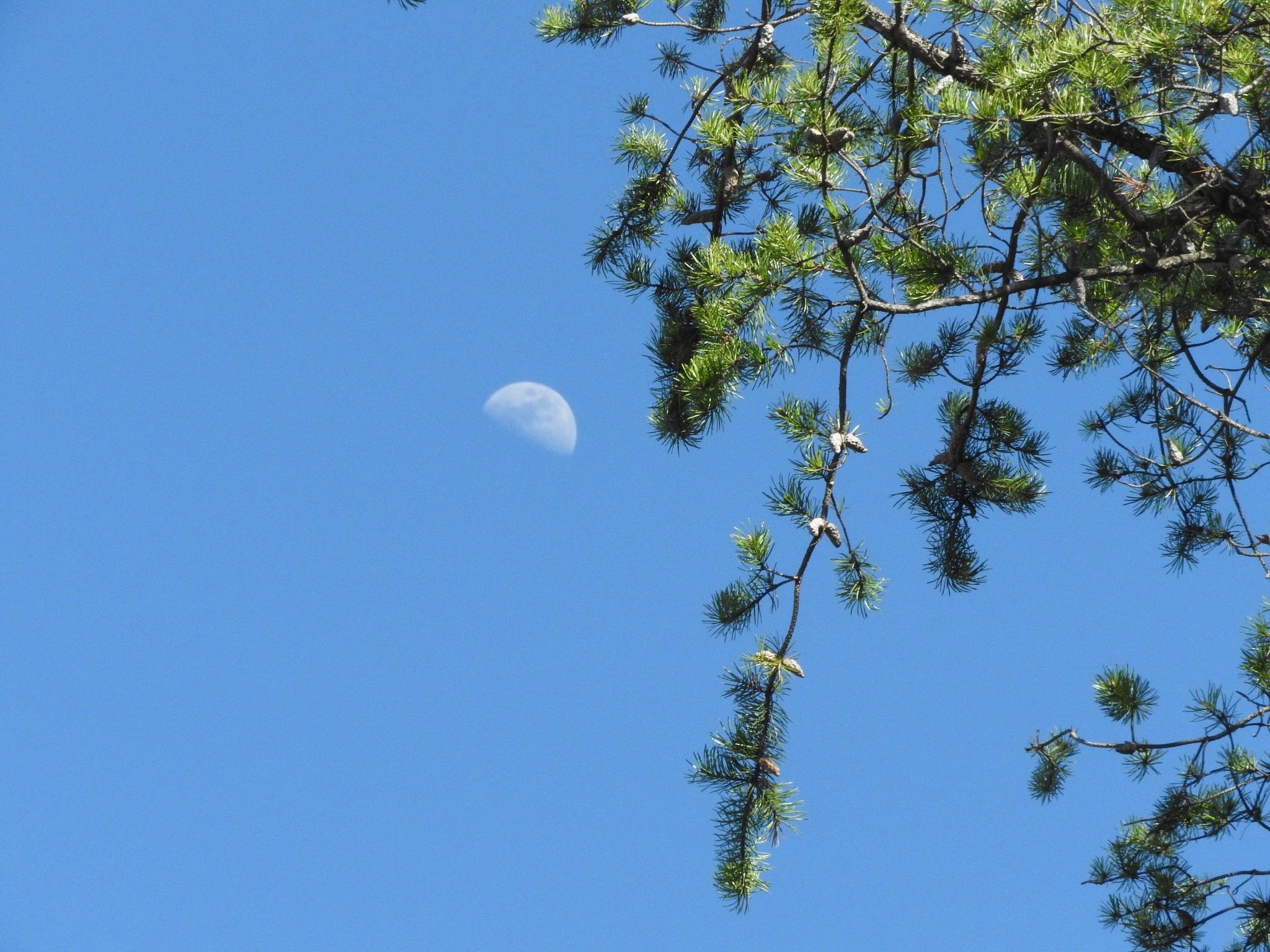 Pretty moon last nite by Lorraine Furmanic